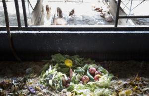Oahu's $4 Million Food Fight