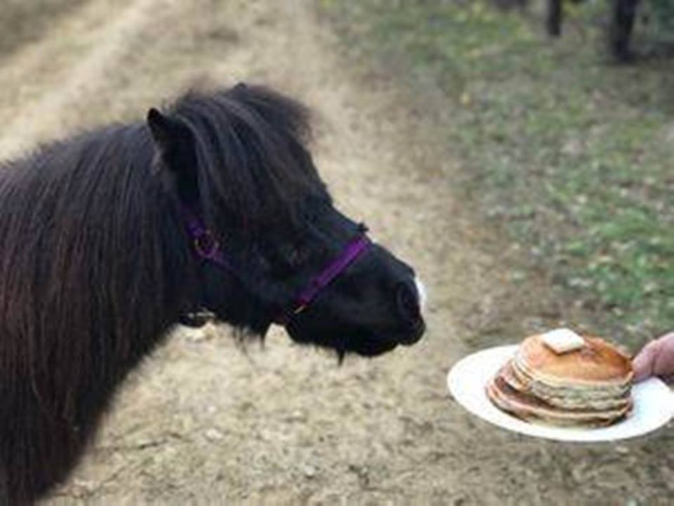 Pancakes and Ponies picture