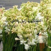 Image of Houda Al Zayed