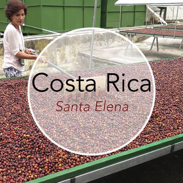 Copper Door Coffee Roasters Costa Rica Santa Elena