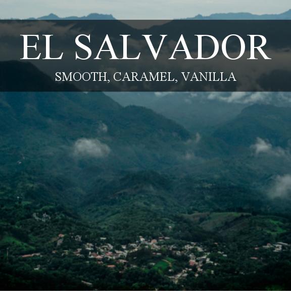 Contrast Coffee El Salvador Finca Las Rositas