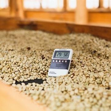 Compelling Coffee Guatemala Bella Carmona