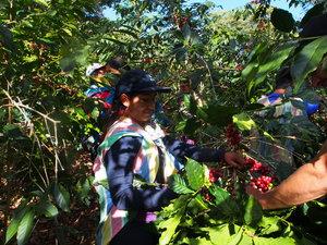 Peaks Coffee Co Peru Norberta M. Rosado