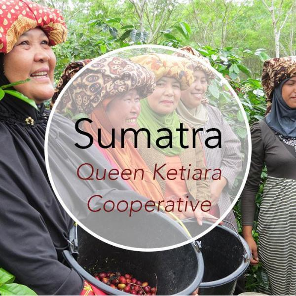 Copper Door Coffee Roasters Sumatra Queen Ketiara
