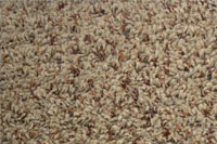 Carpet Glacier Bay Nutshell