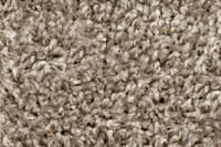 Carpet Glacier Bay Willow