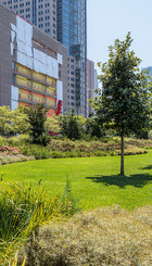 Urbano zelenilo