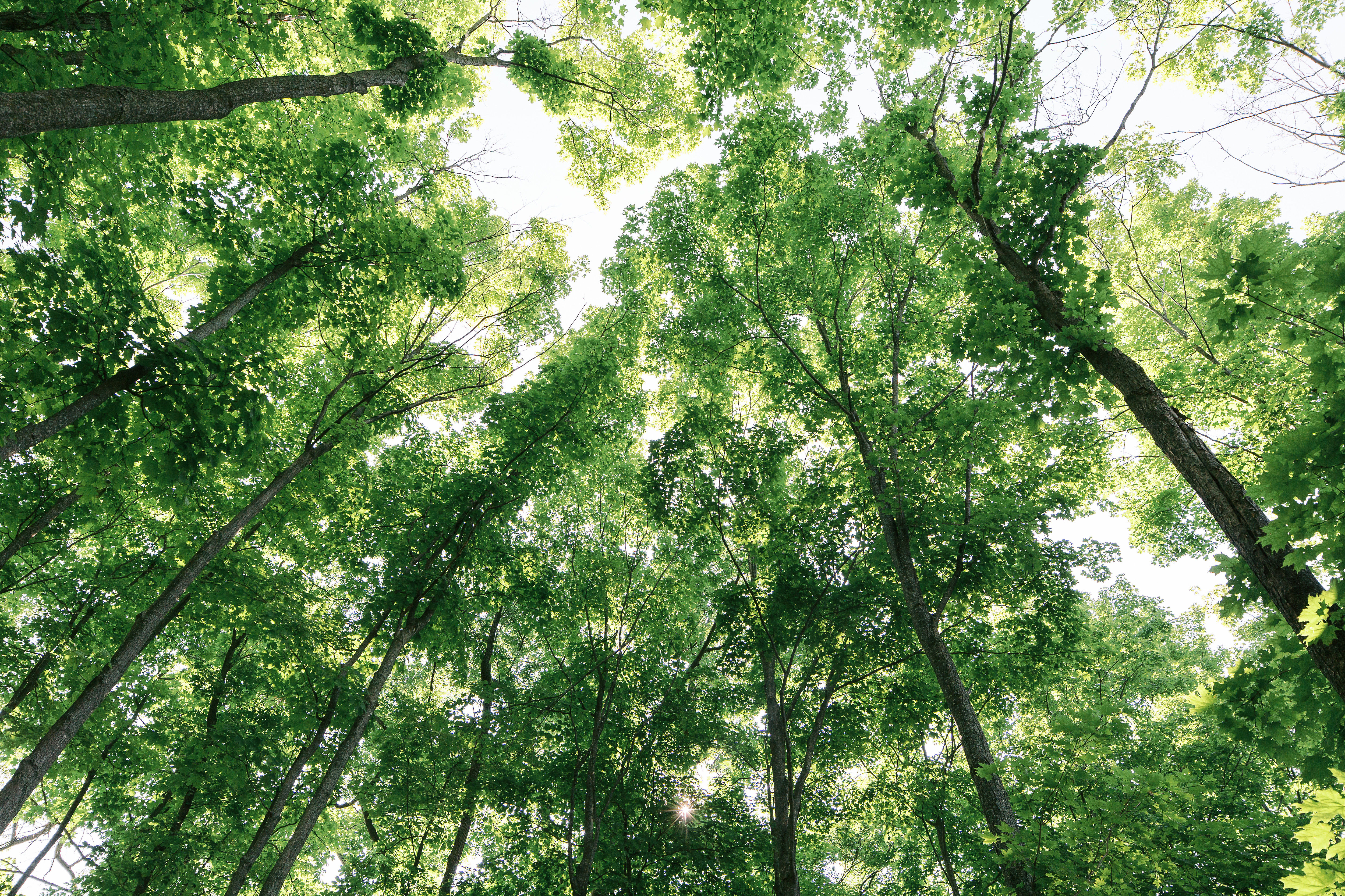 Here's How Shopping at IKEA Can Help Plant More Trees   Hunker