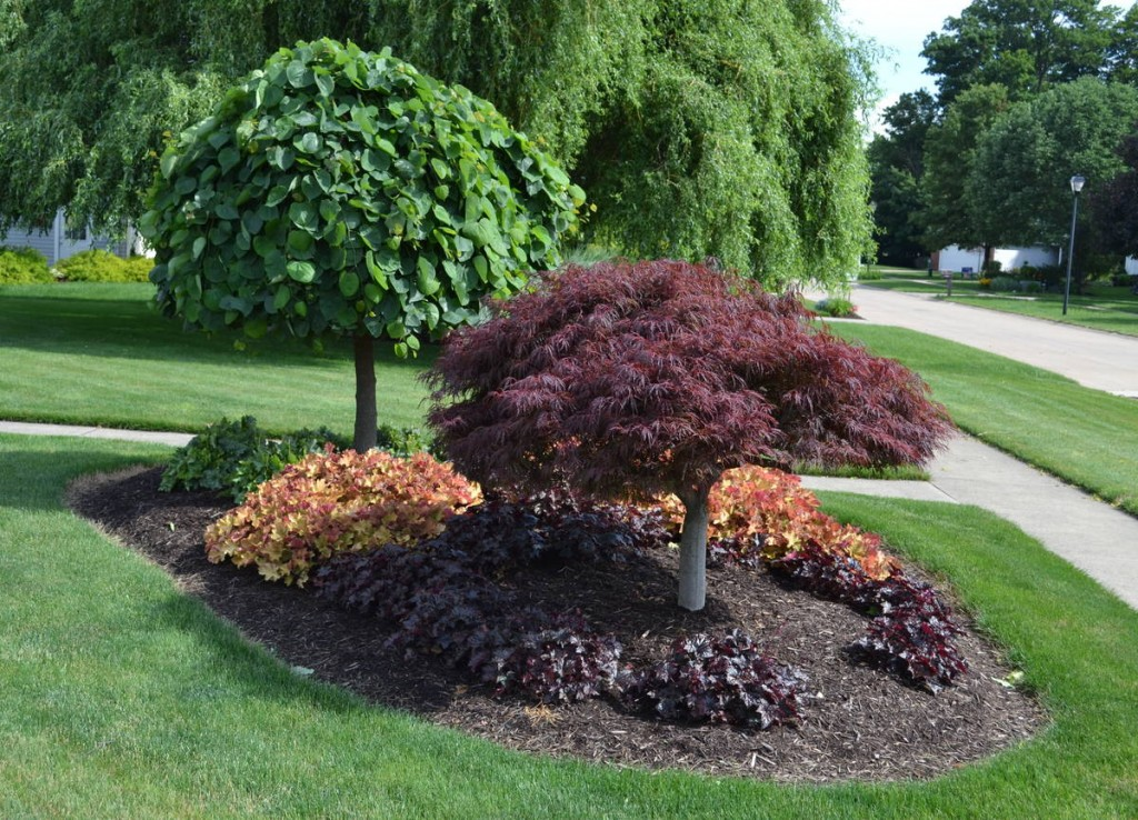 How To Create A Shrub Island Landscape Berm Hunker