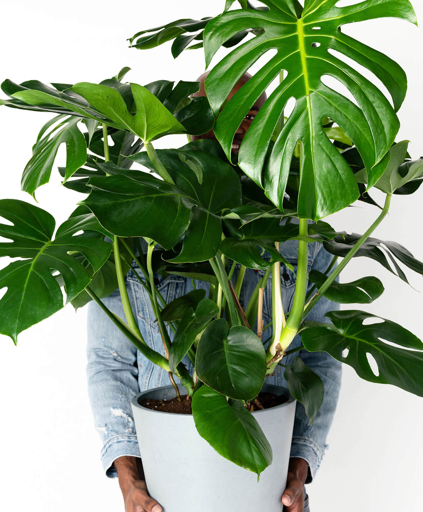These Houseplants Are Sure to Impress | Hunker