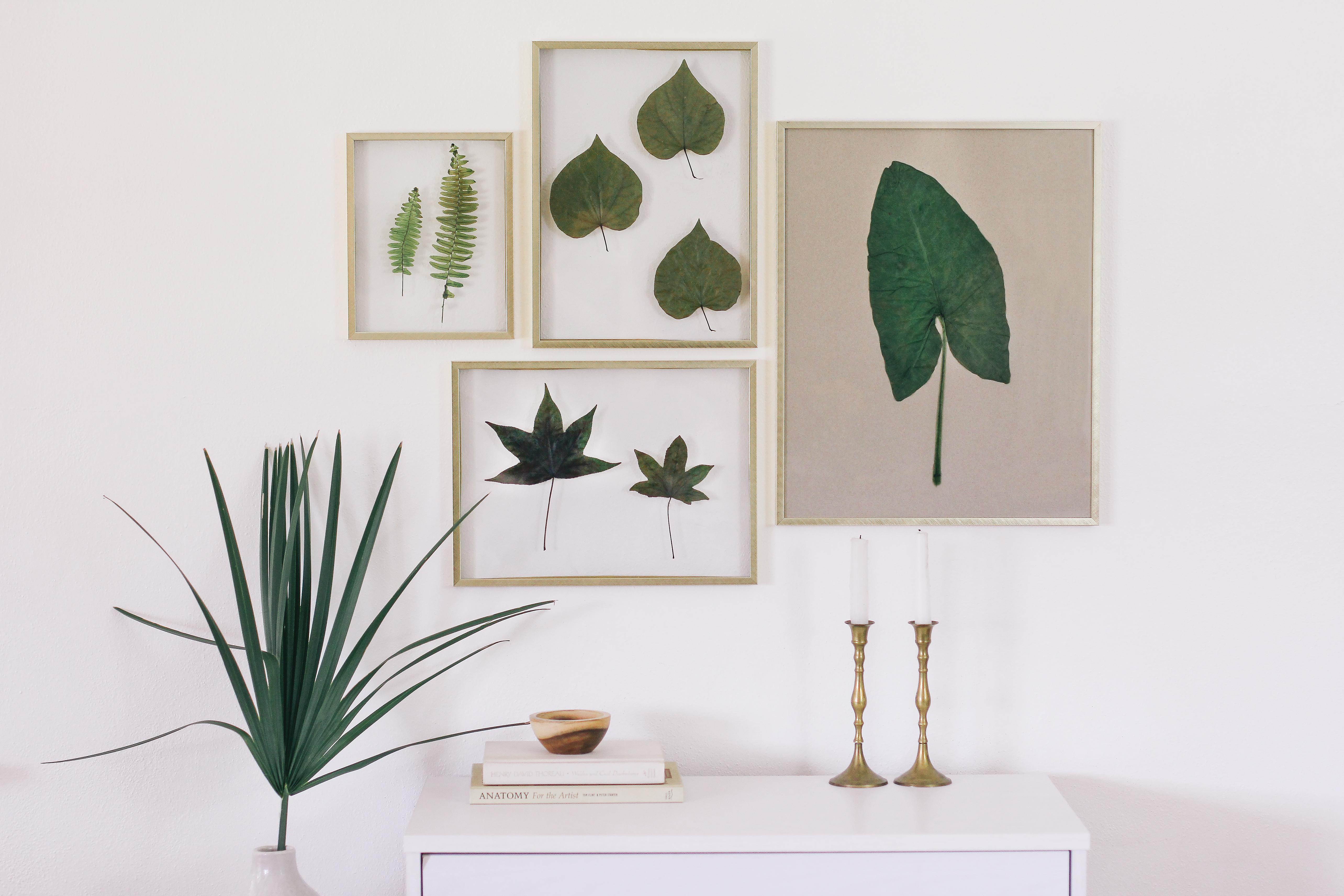 How to Frame Real Leaves to Create Original Botanical Art   Hunker