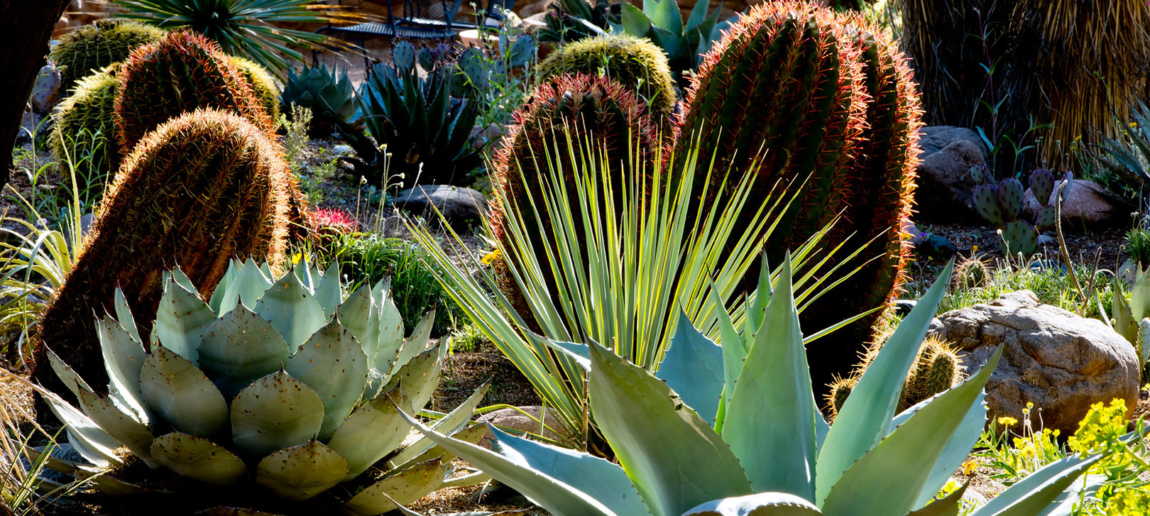Tips For Designing A Desert Garden Hunker