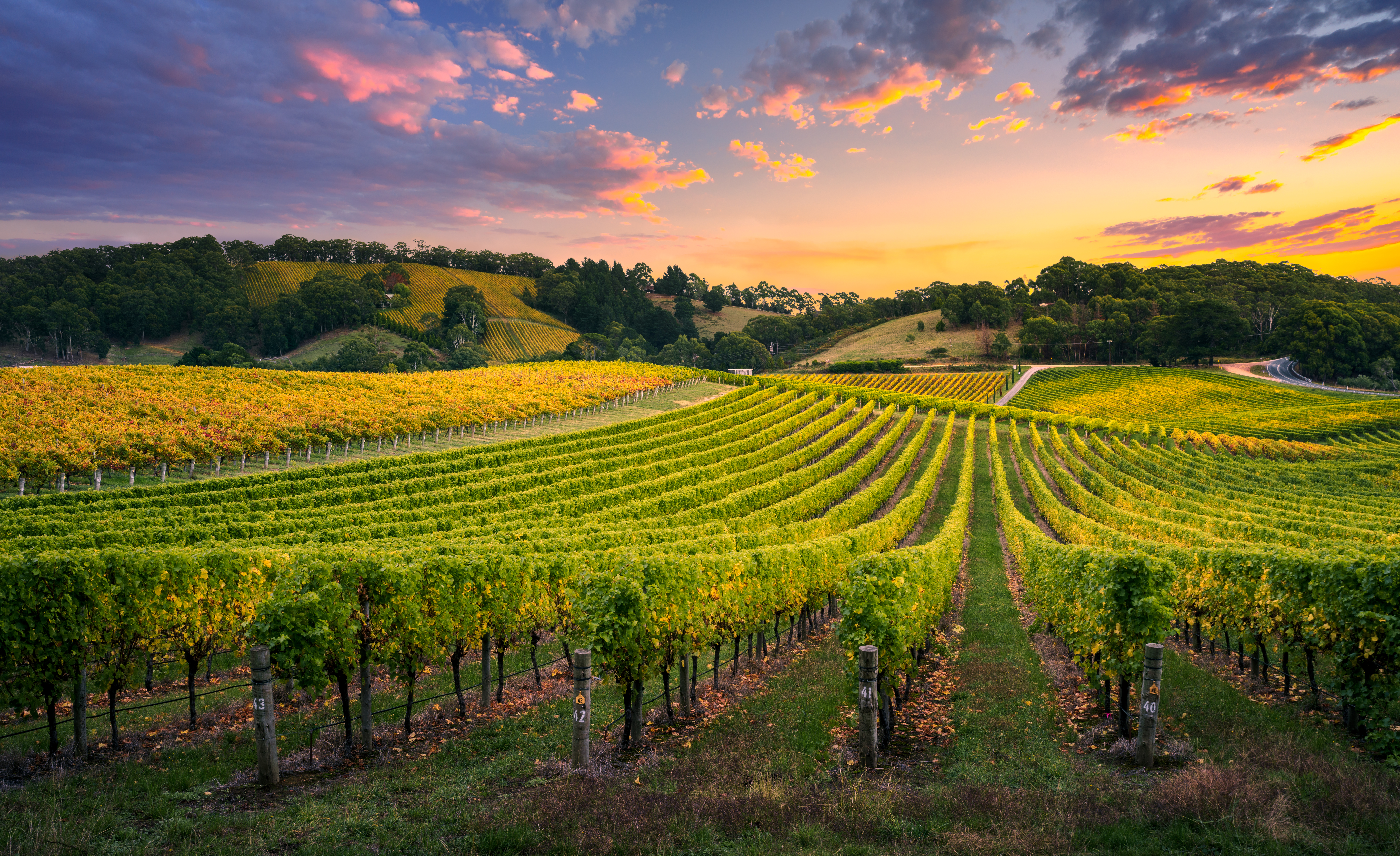 How Long Does It Take for Grape Vines to Produce Grapes? | Home