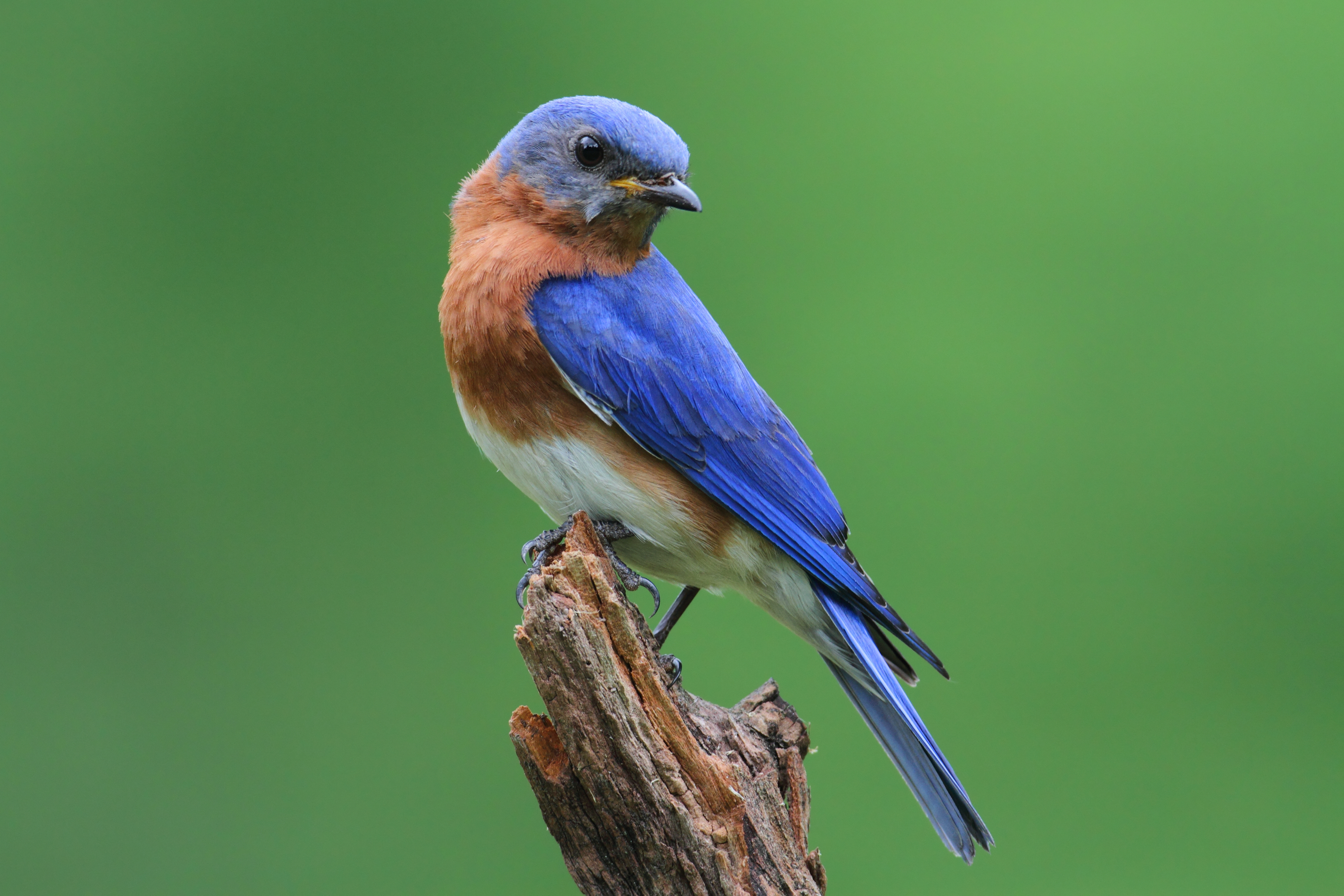 What Direction Should a Bluebird House Face? | Sciencing on free bird feeder designs, bird house designs, free martin bird house plans, free printable bird house plans, free gazebo designs,