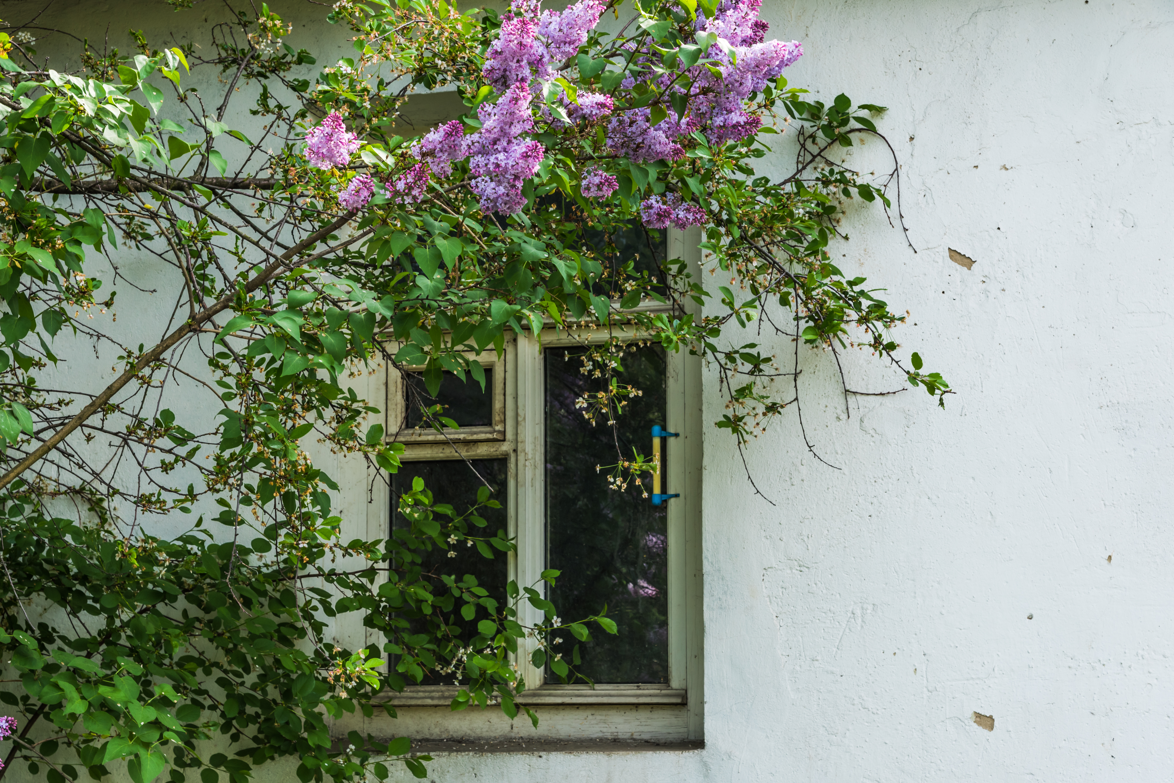 The Best Trees To Plant Near A House Home Guides Sf Gate
