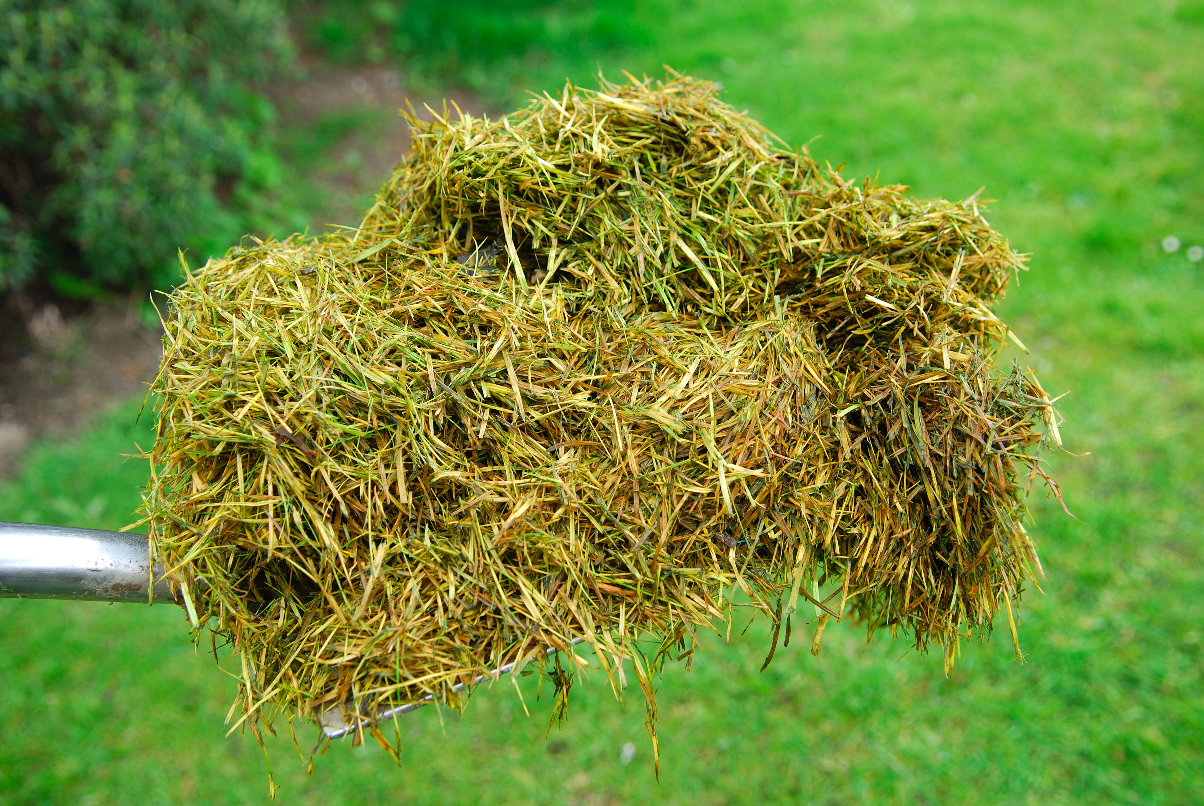 How to Handle a Large Quantity of Grass Clippings | Home