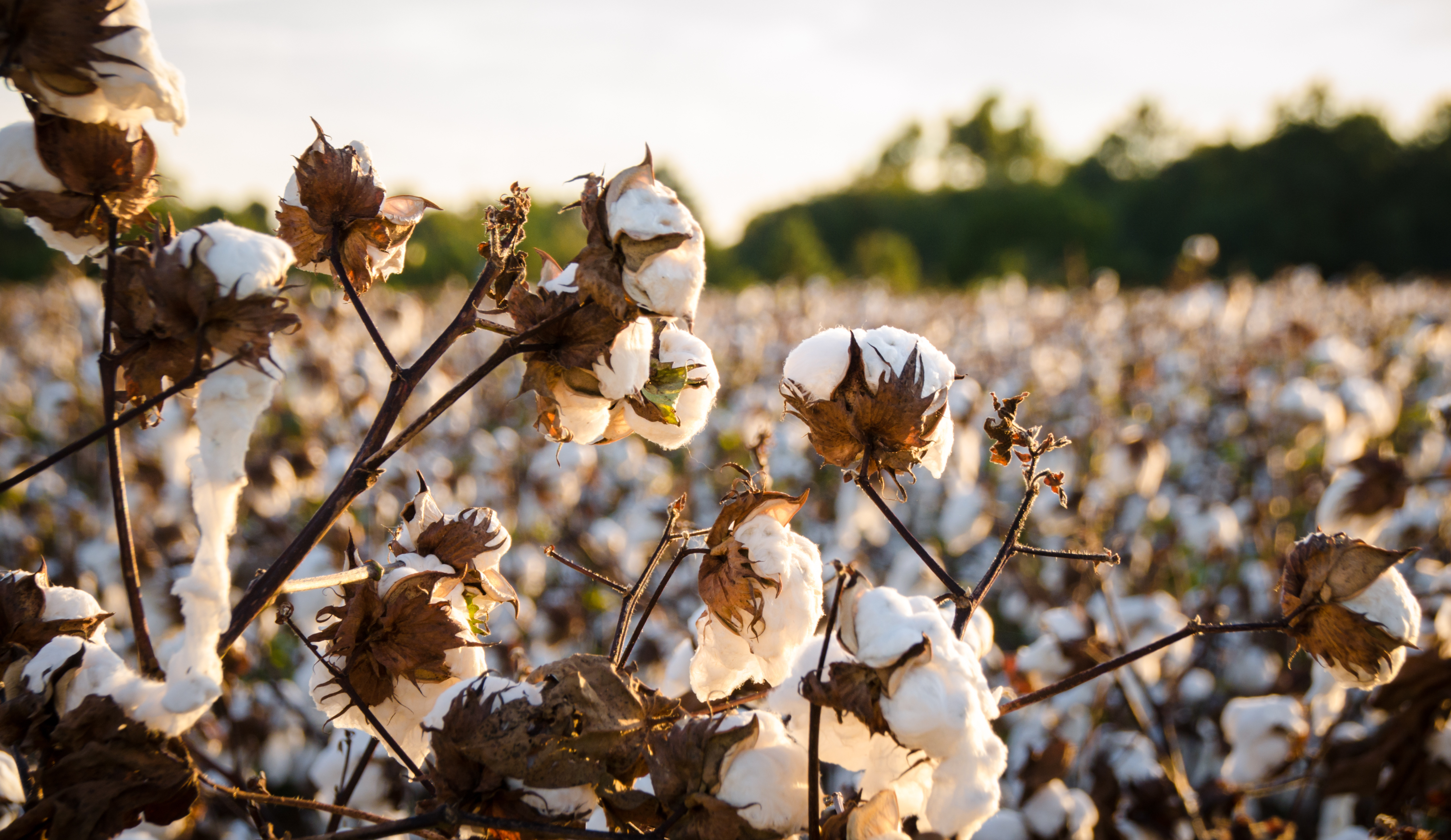 Stages of the Cotton Manufacturing Process | Bizfluent