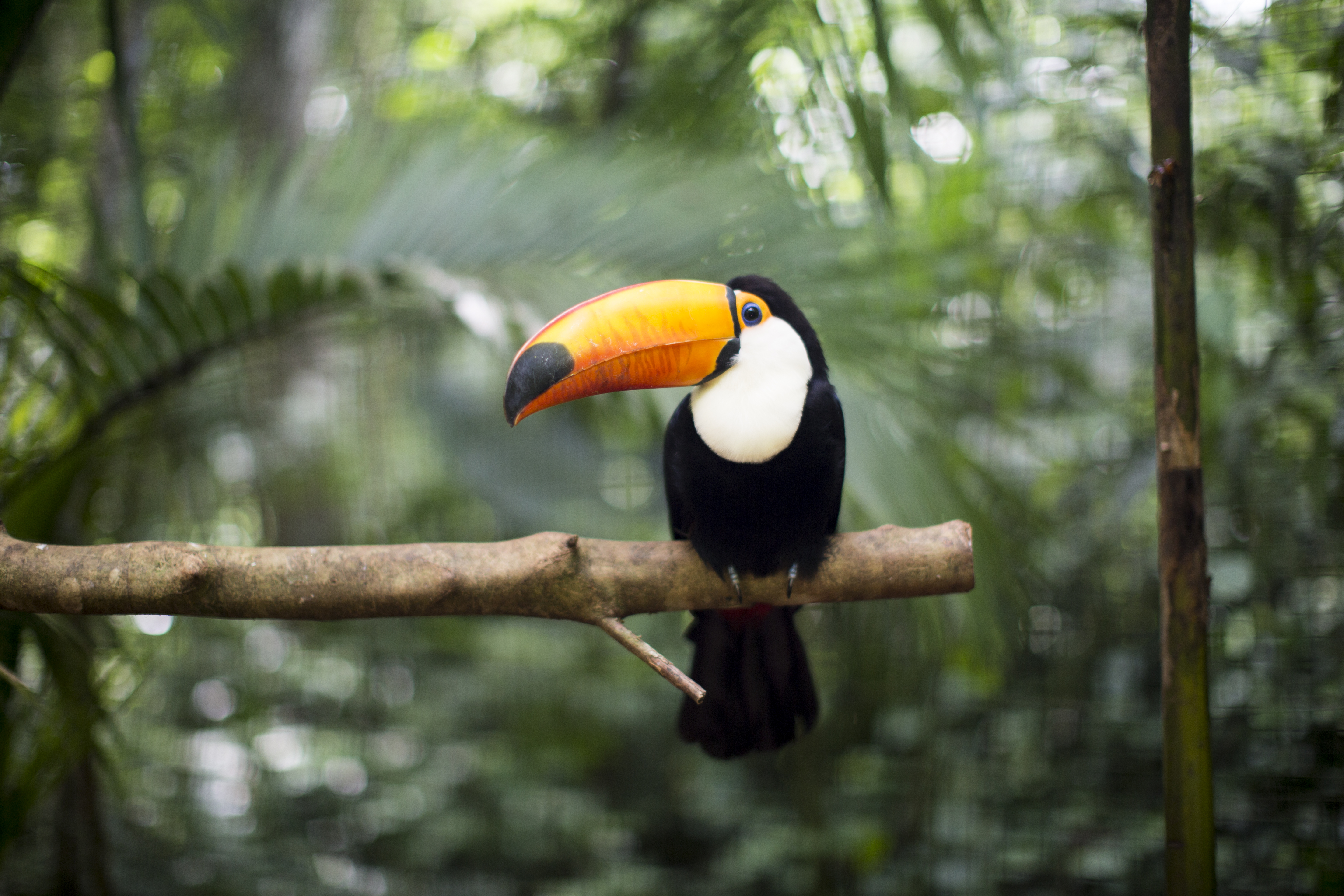 Animals That Live In The Canopy Layer Of The Rainforest