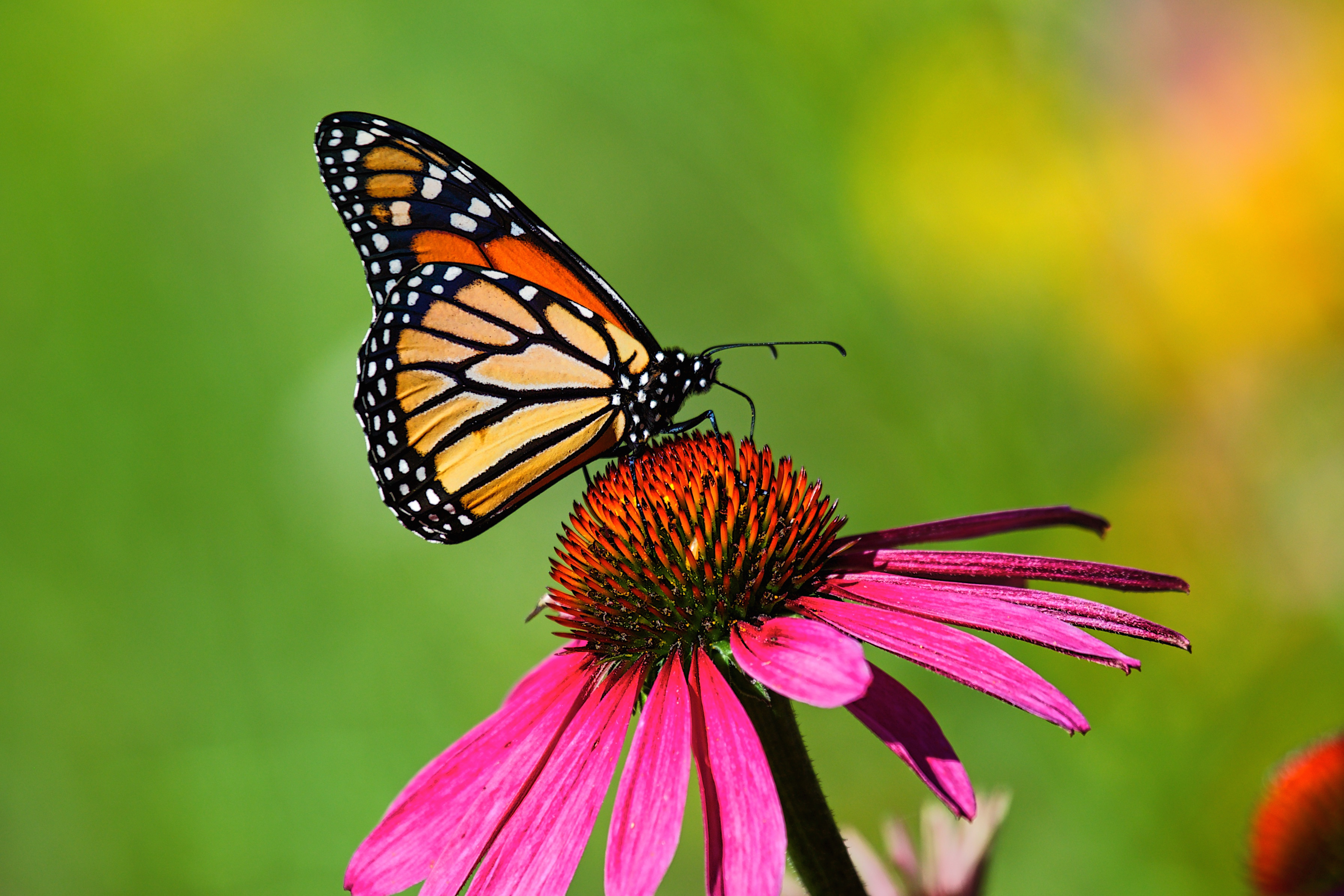 74c6d4bb6 What Do You Do for a Butterfly With Crinkled Wings?