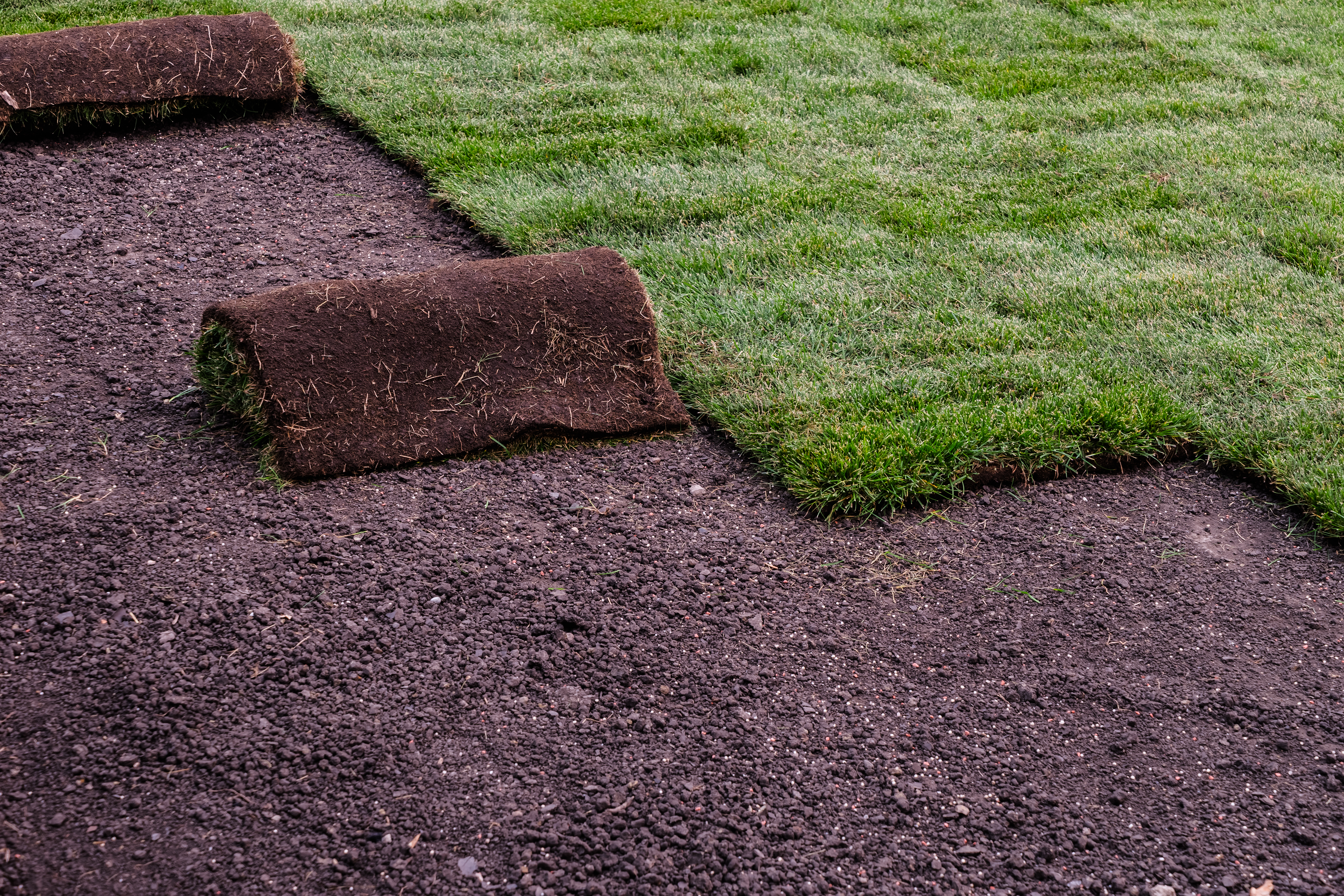 Things to Do After New Sod Is Installed | Home Guides | SF Gate