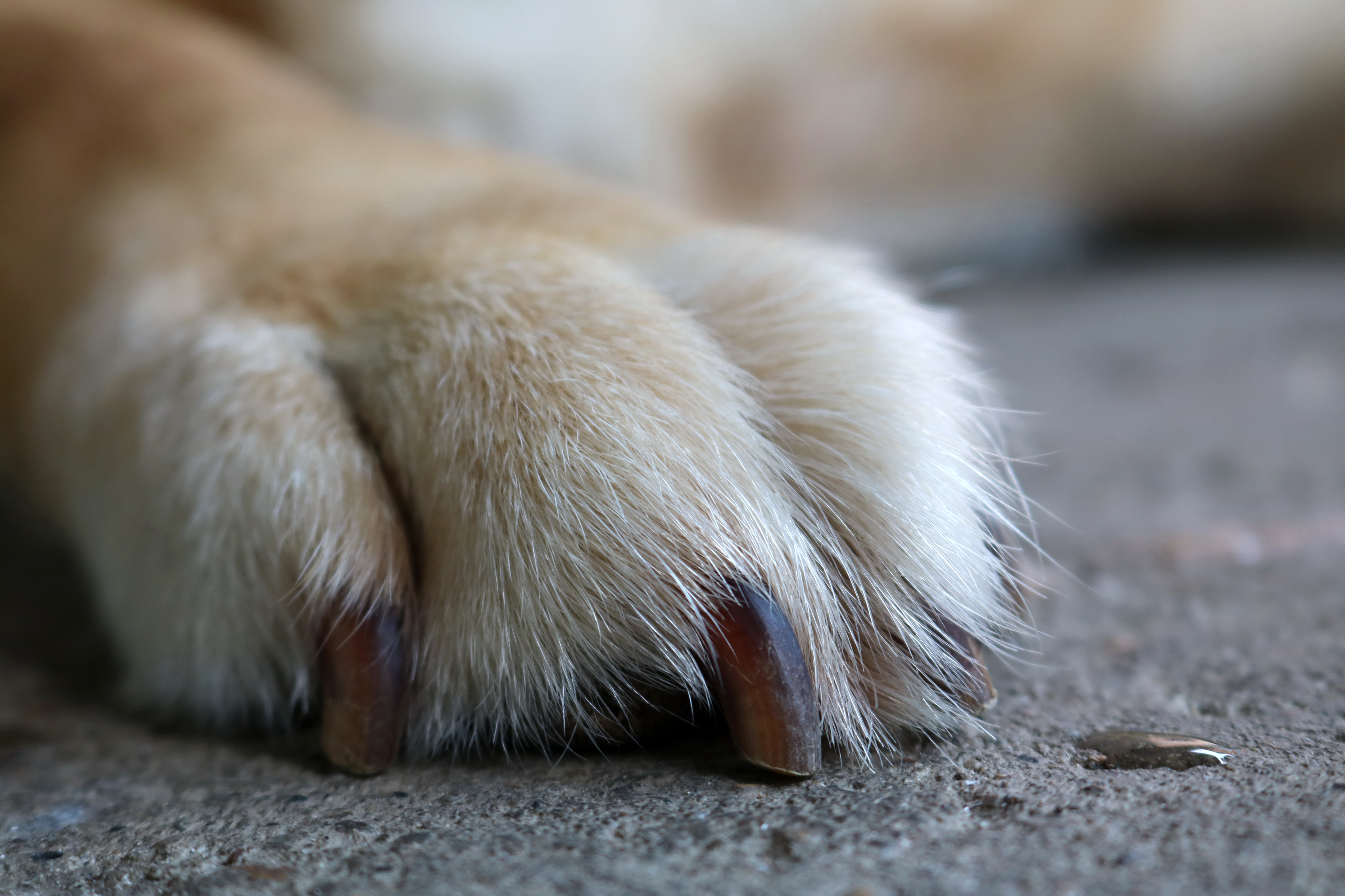 Causes of Canine Paw Knuckling | Cuteness