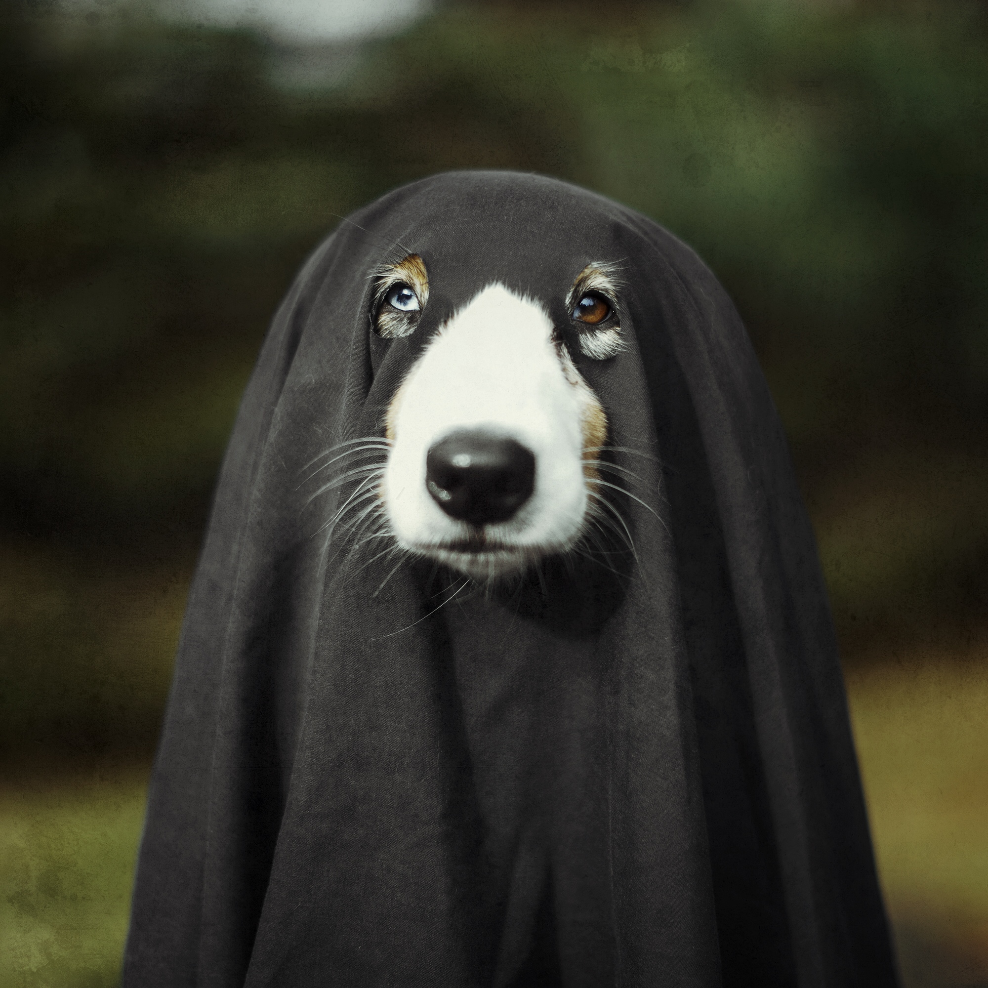 101 Horror Movie Names For Dogs | Cuteness