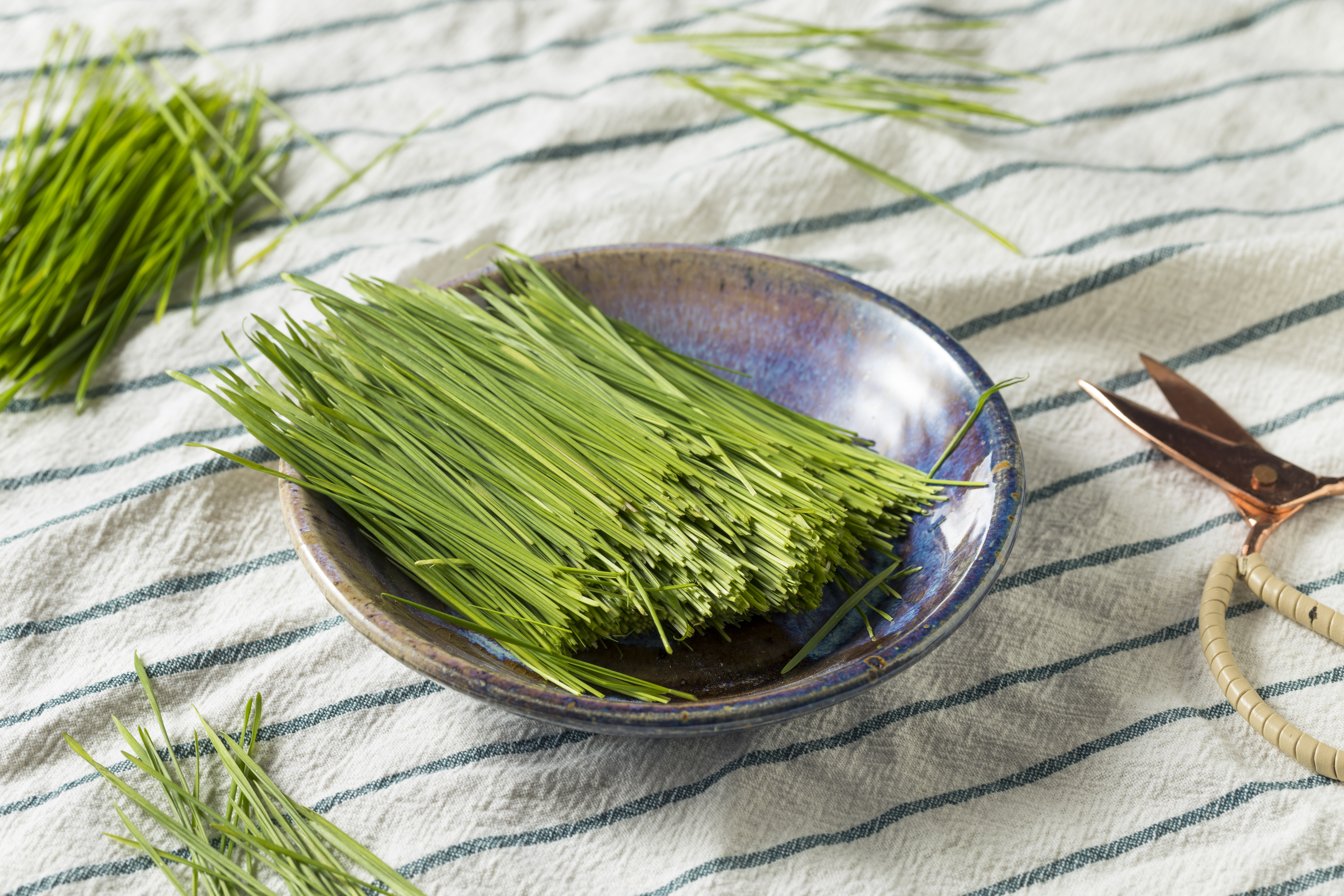 How to Store Wheatgrass Powder | Healthy Eating | SF Gate