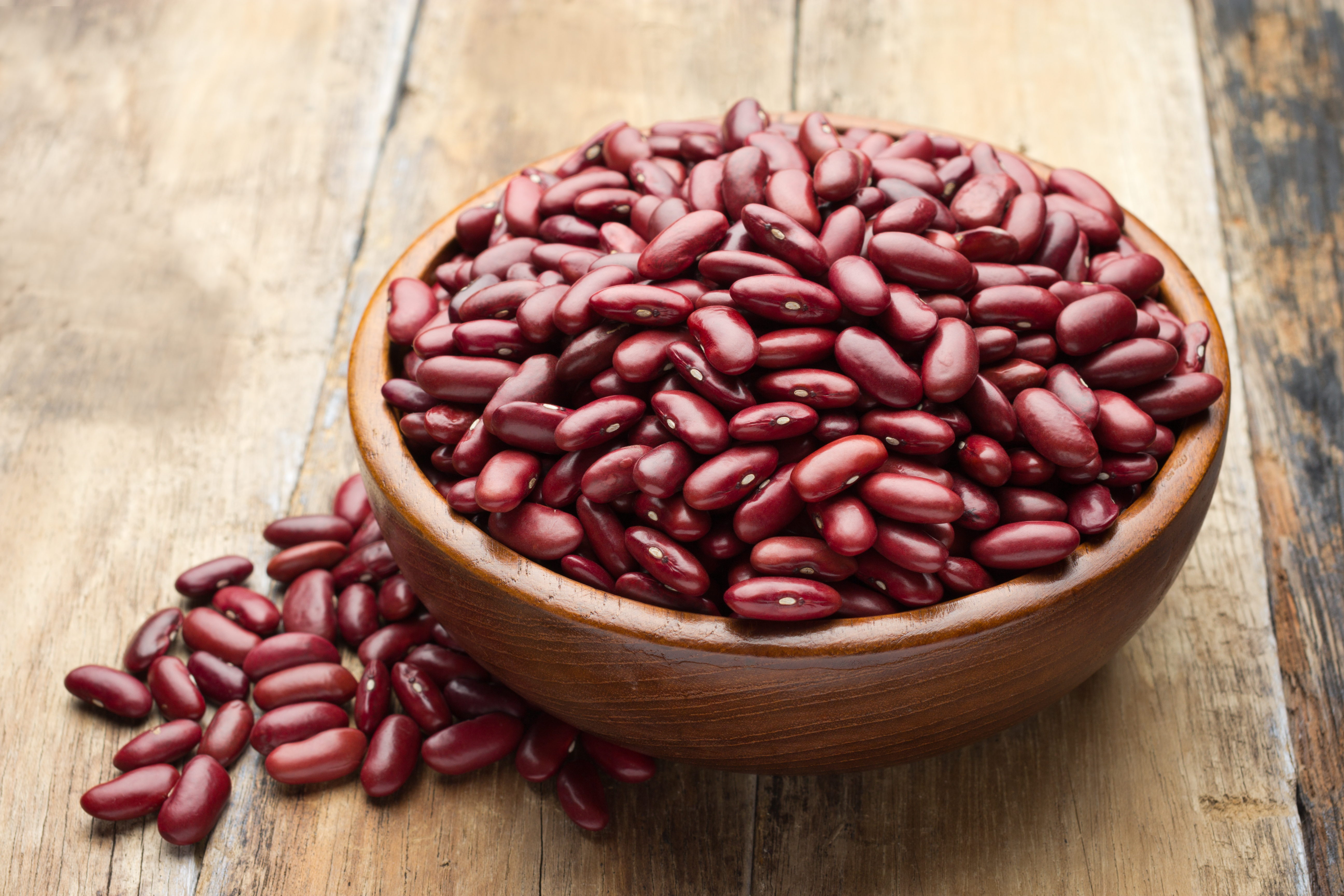 What Is The Difference Between Great Northern Beans And Pinto Beans