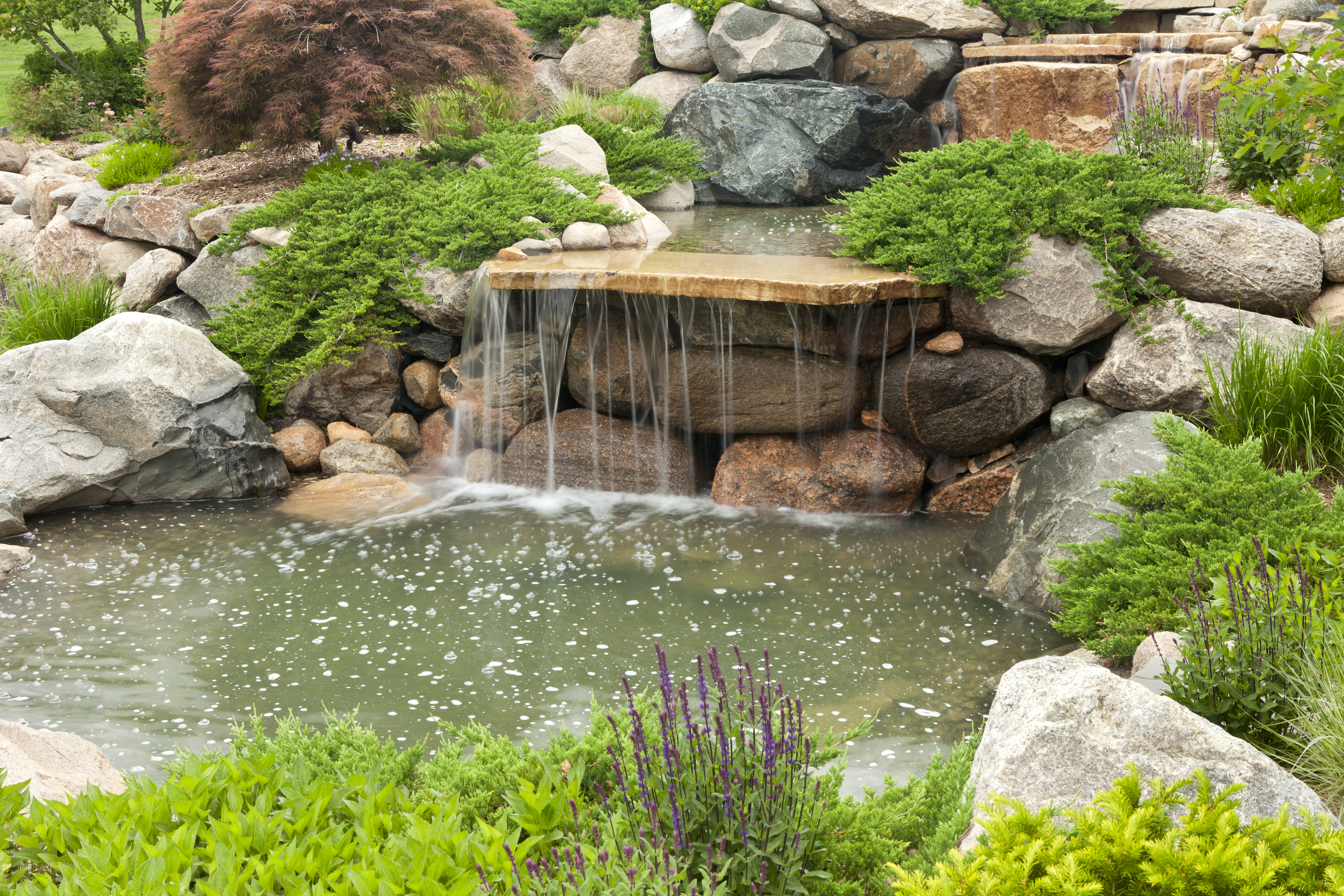 Water Worms in a Garden Pond | Home Guides | SF Gate