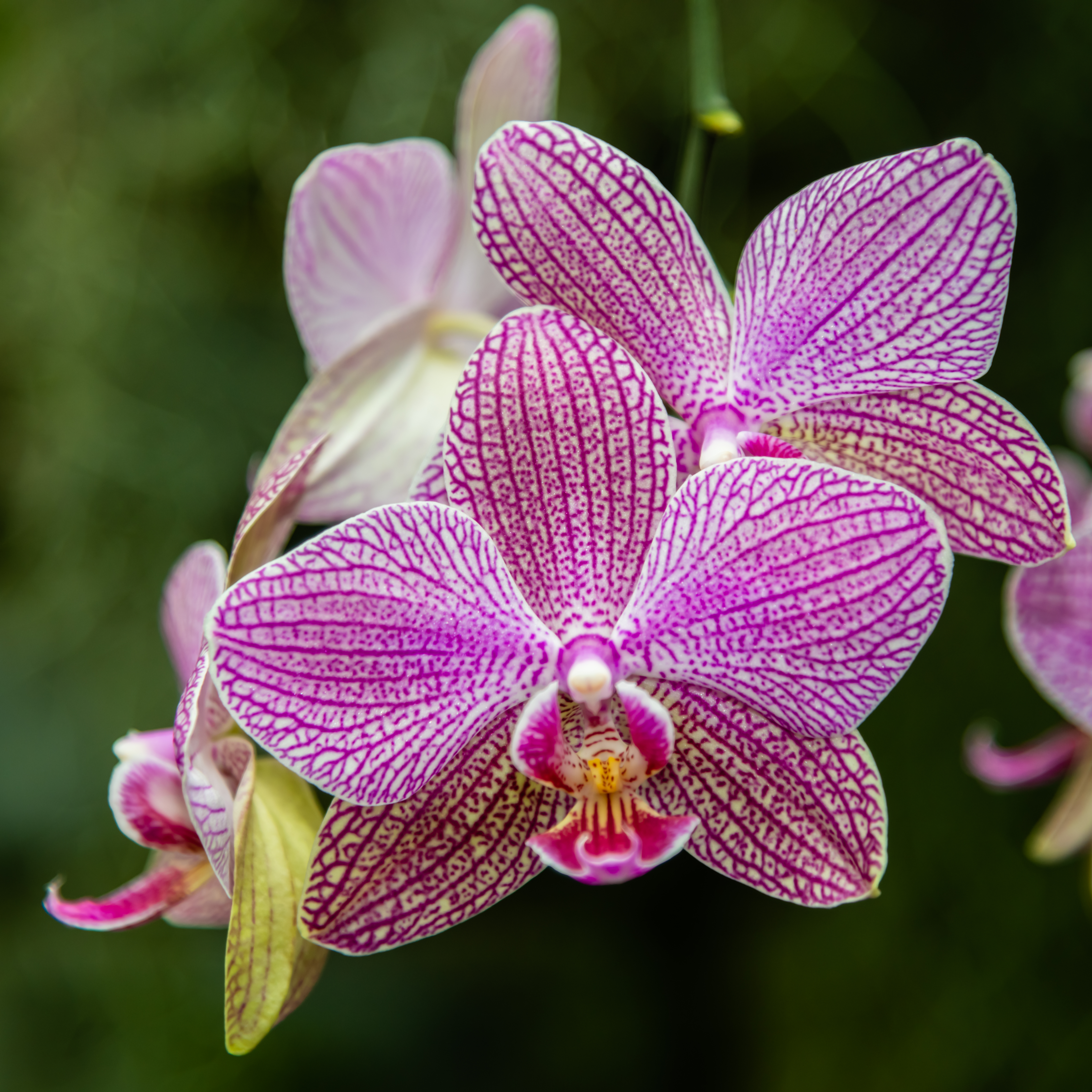 How And When To Prune Orchids Hunker