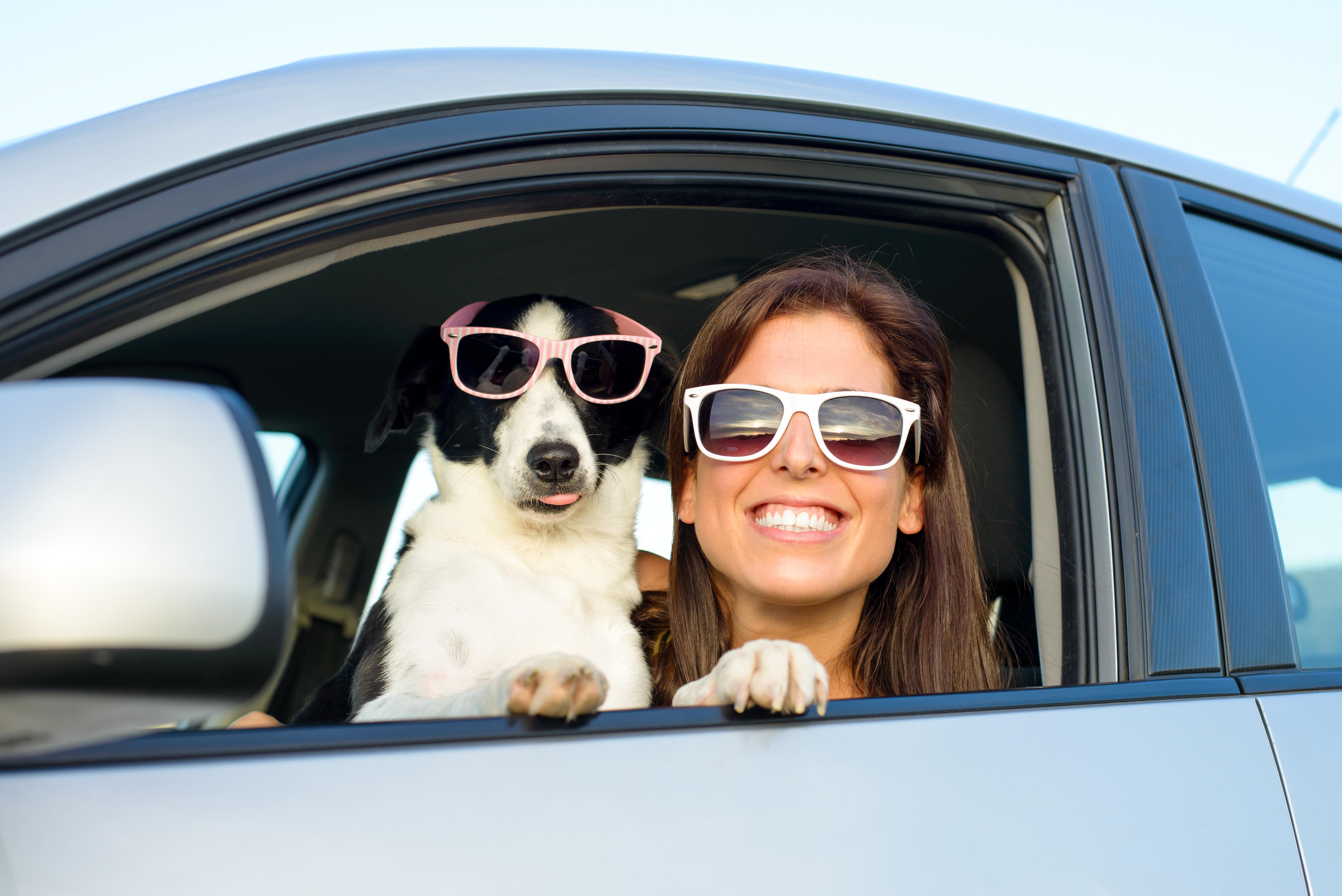 Do Uber Lyft Allow Pets Cuteness