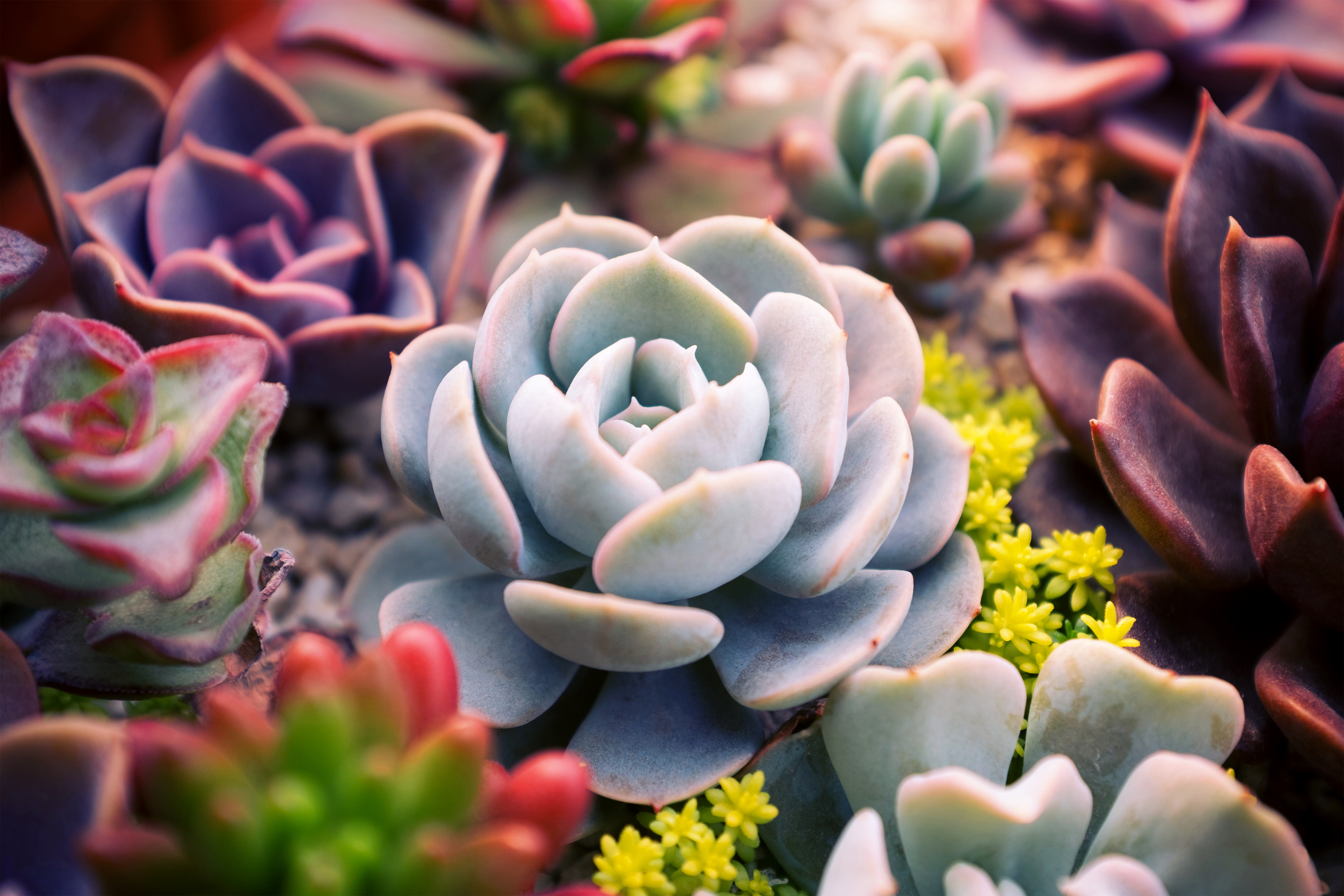 How To Prune Succulents Home Guides Sf Gate