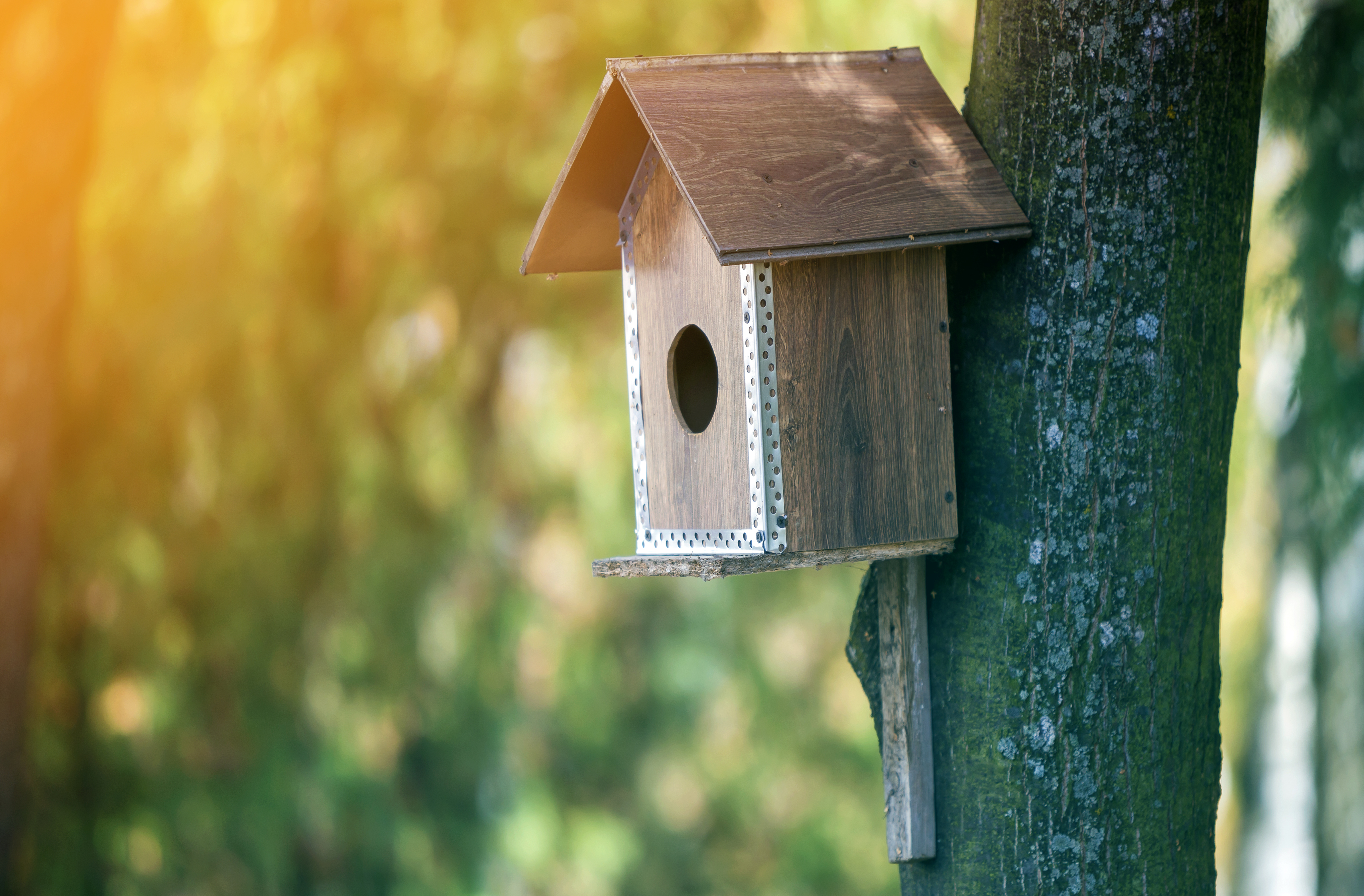 Brilliant How To Attach A Birdhouse To A Tree Without Damage Home Download Free Architecture Designs Scobabritishbridgeorg