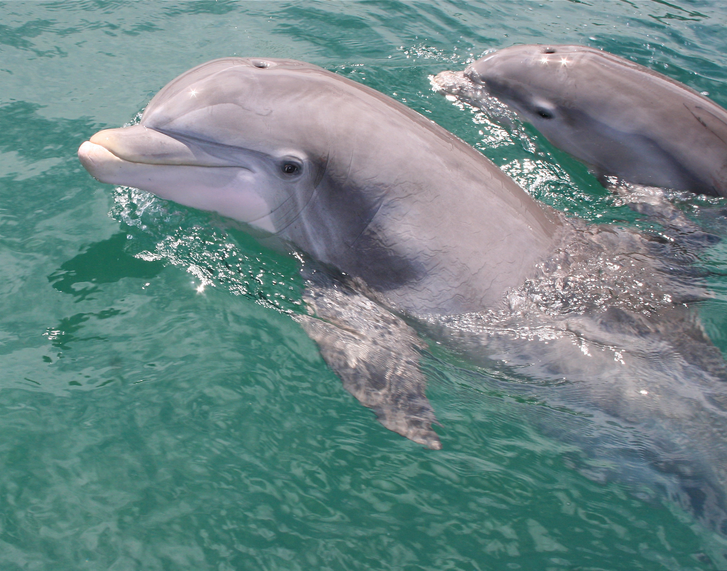 How Do Dolphins Nurse? | Sciencing