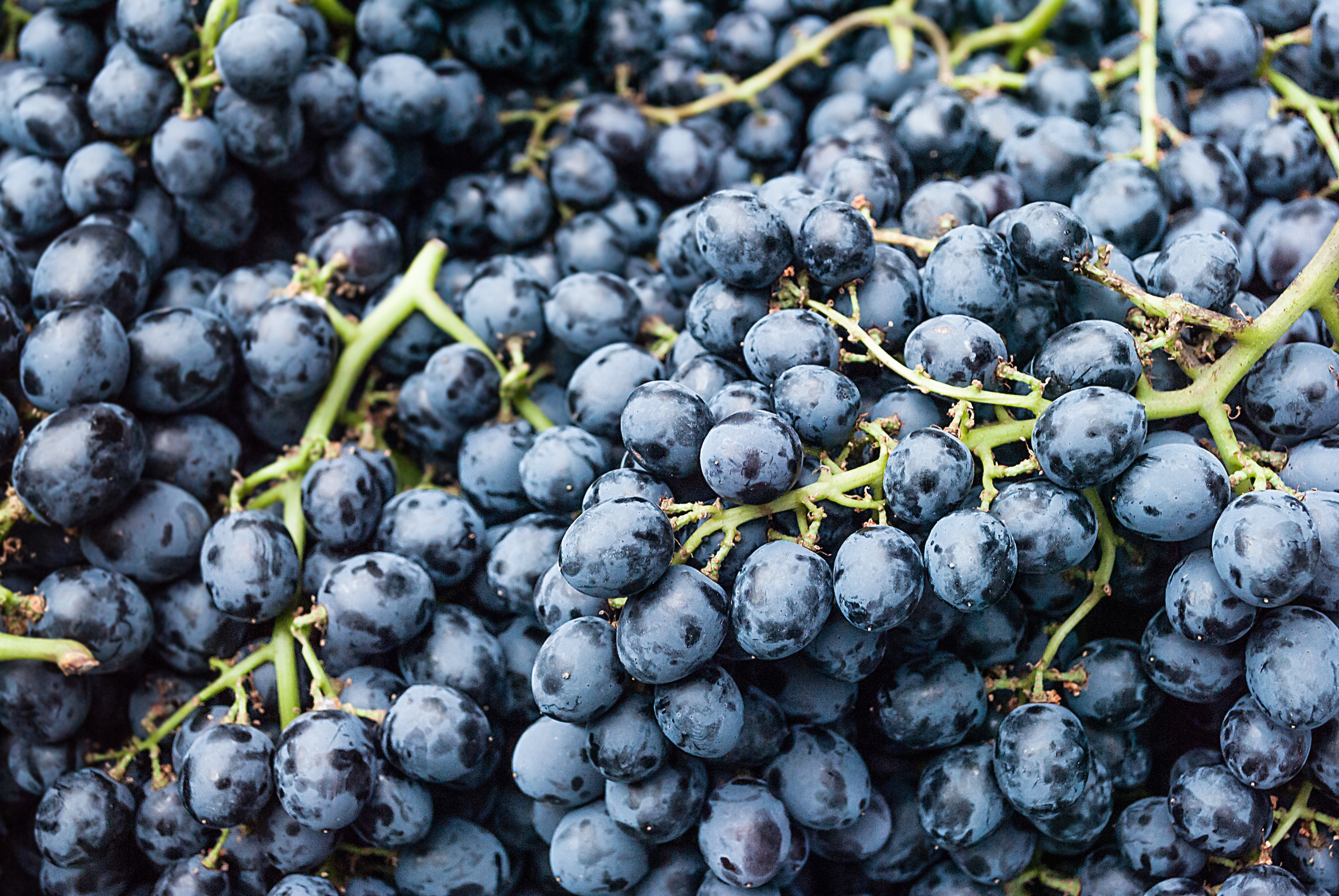 How to Clean Grapes Treated With Sulfur Dioxide   LEAFtv