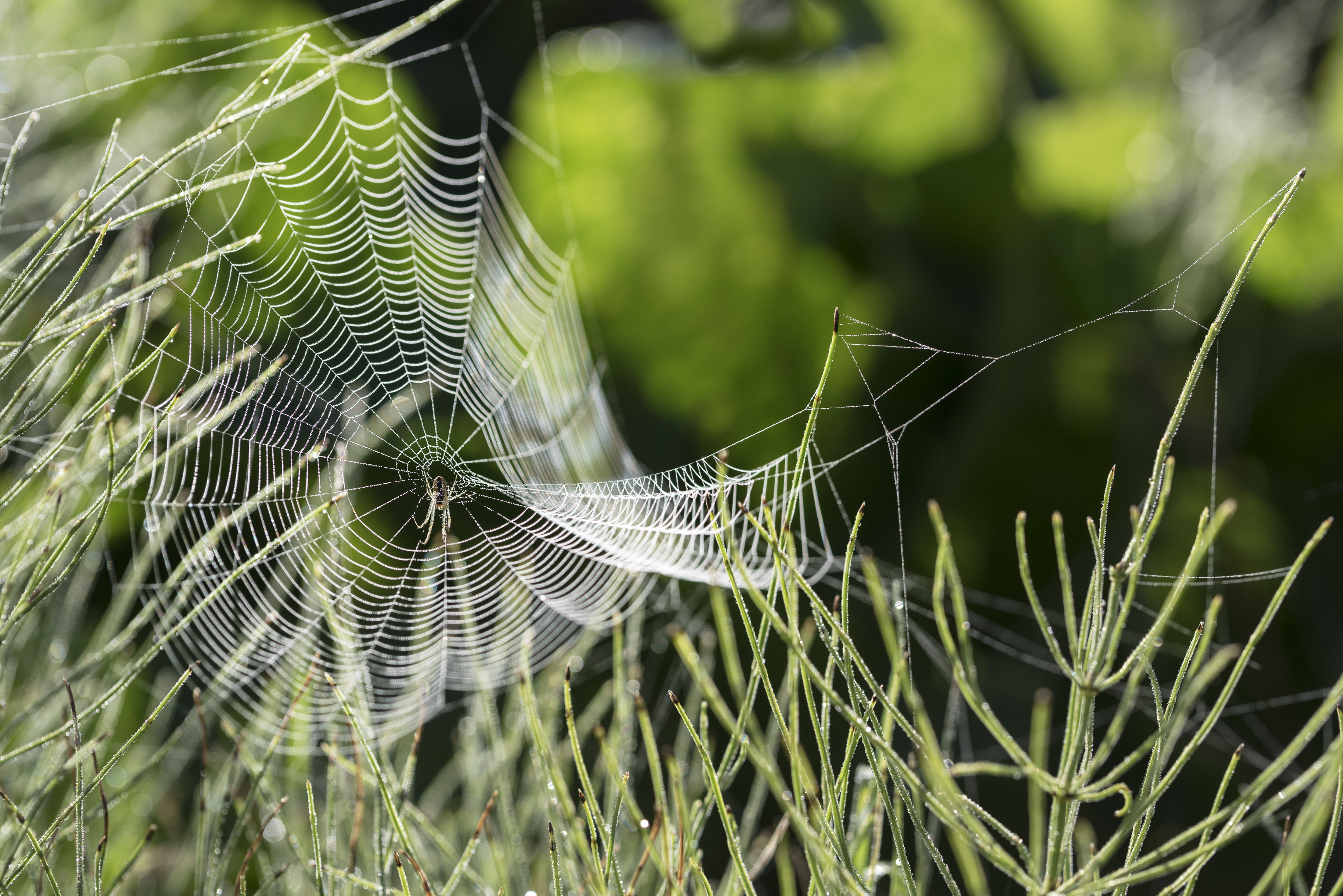 What Can You Spray in Your Yard to Get Rid of Spiders