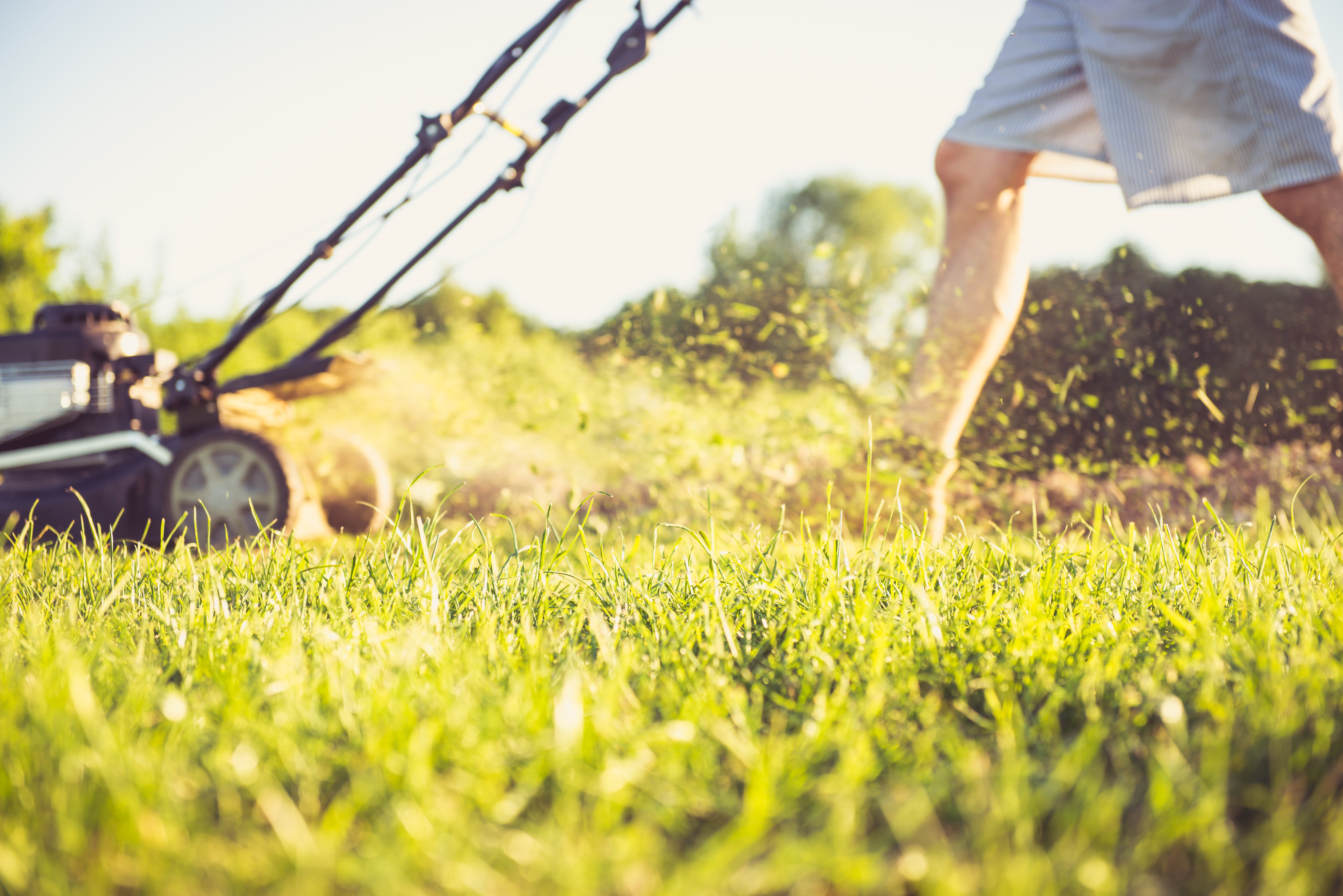 What Kind of Gas Do Lawn Mowers Use? | Home Guides | SF Gate