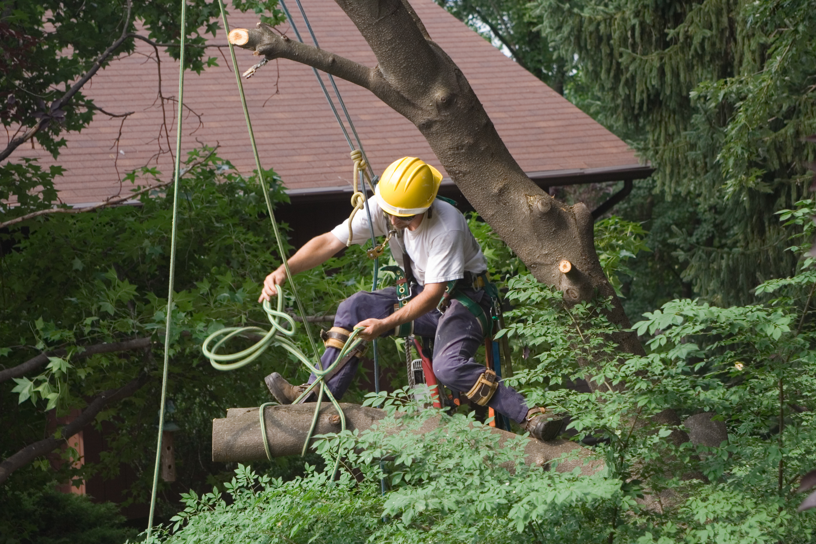 What Is The Average Cost Of Removing A Large Tree Budgeting Money