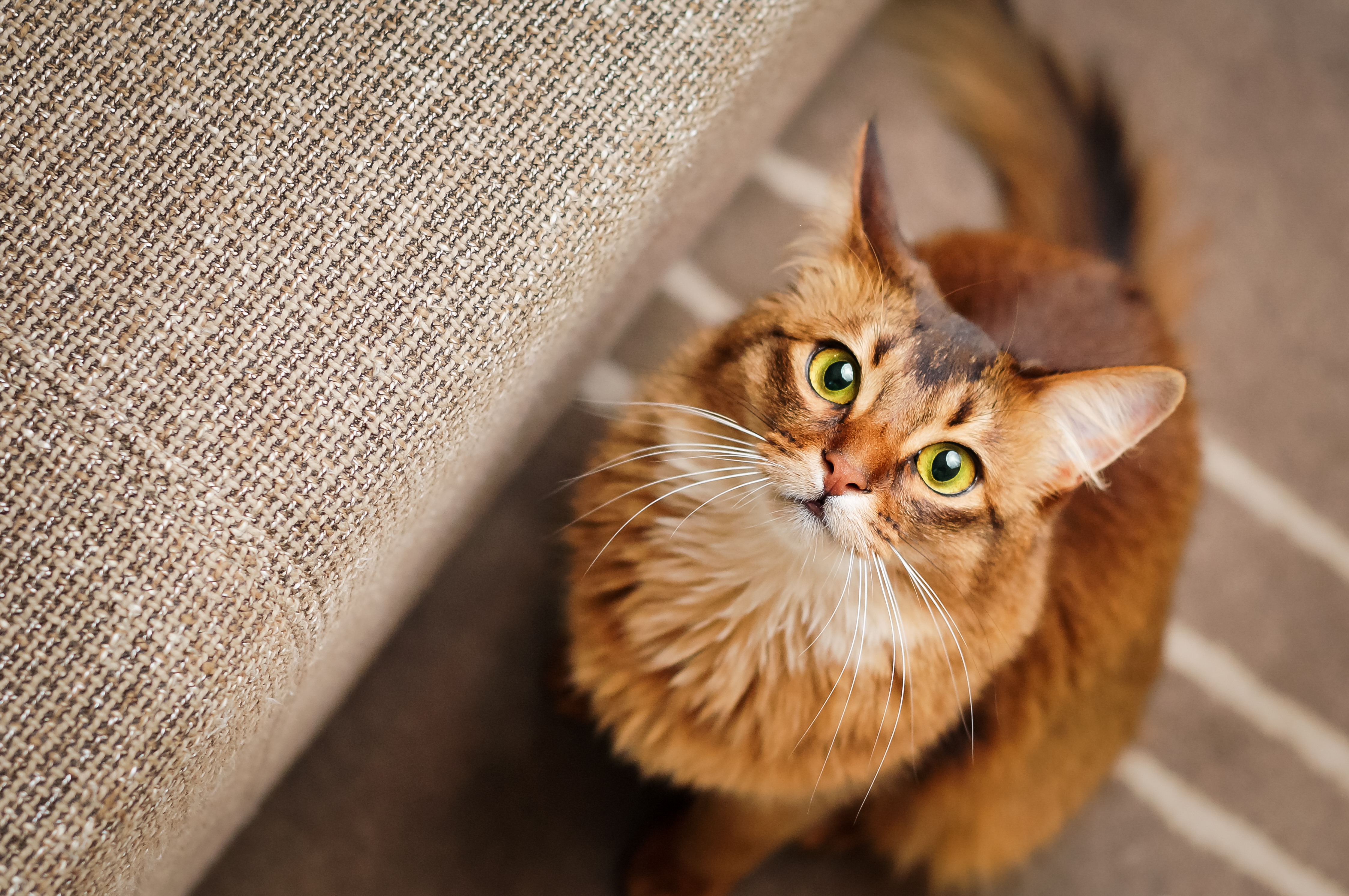 Praziquantel Dosage for Cats   Cuteness