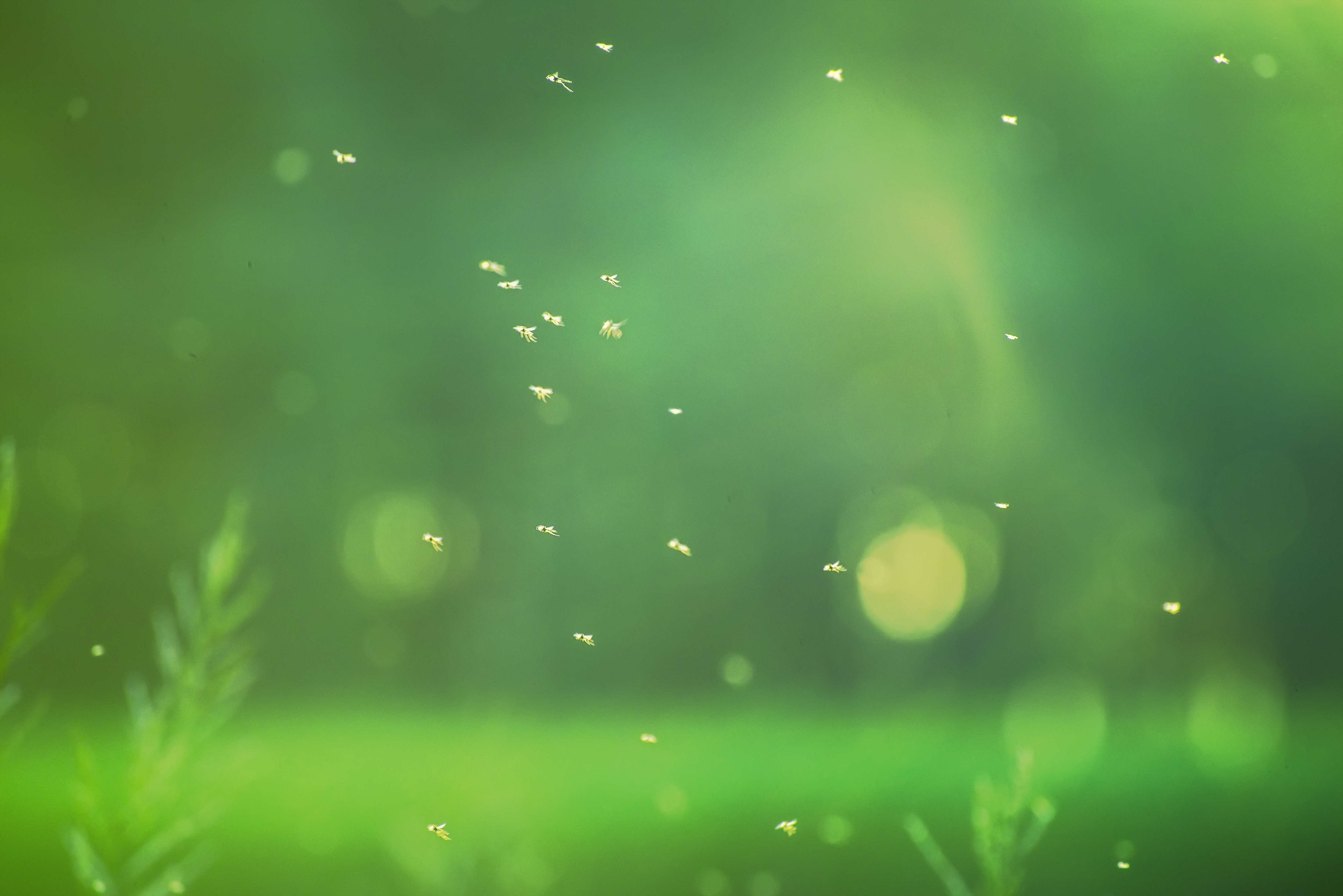 How to Get Rid of Swarming Gnats in Our Yard | Home Guides