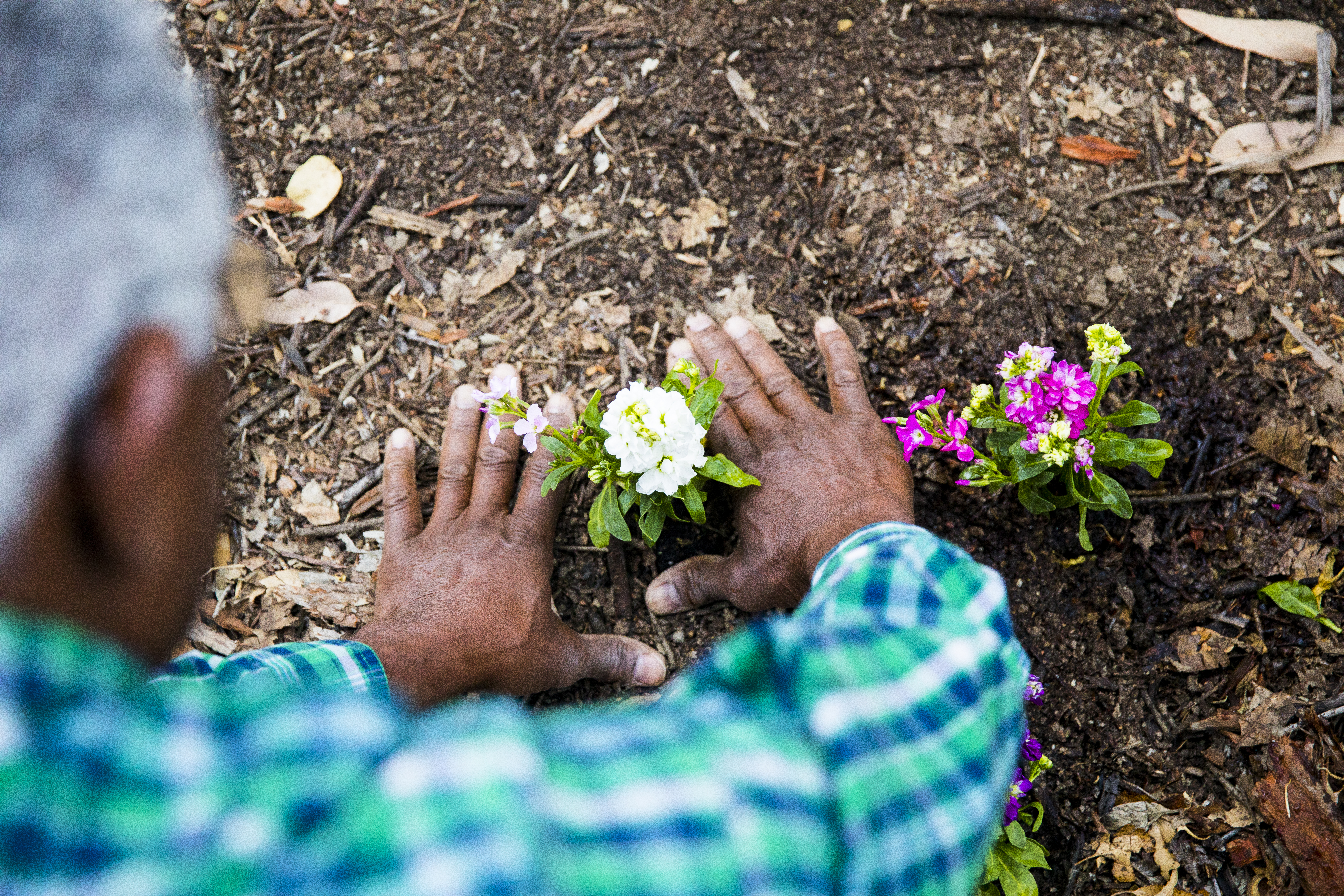 How Long to Wait Before Using Horse Manure in a Garden