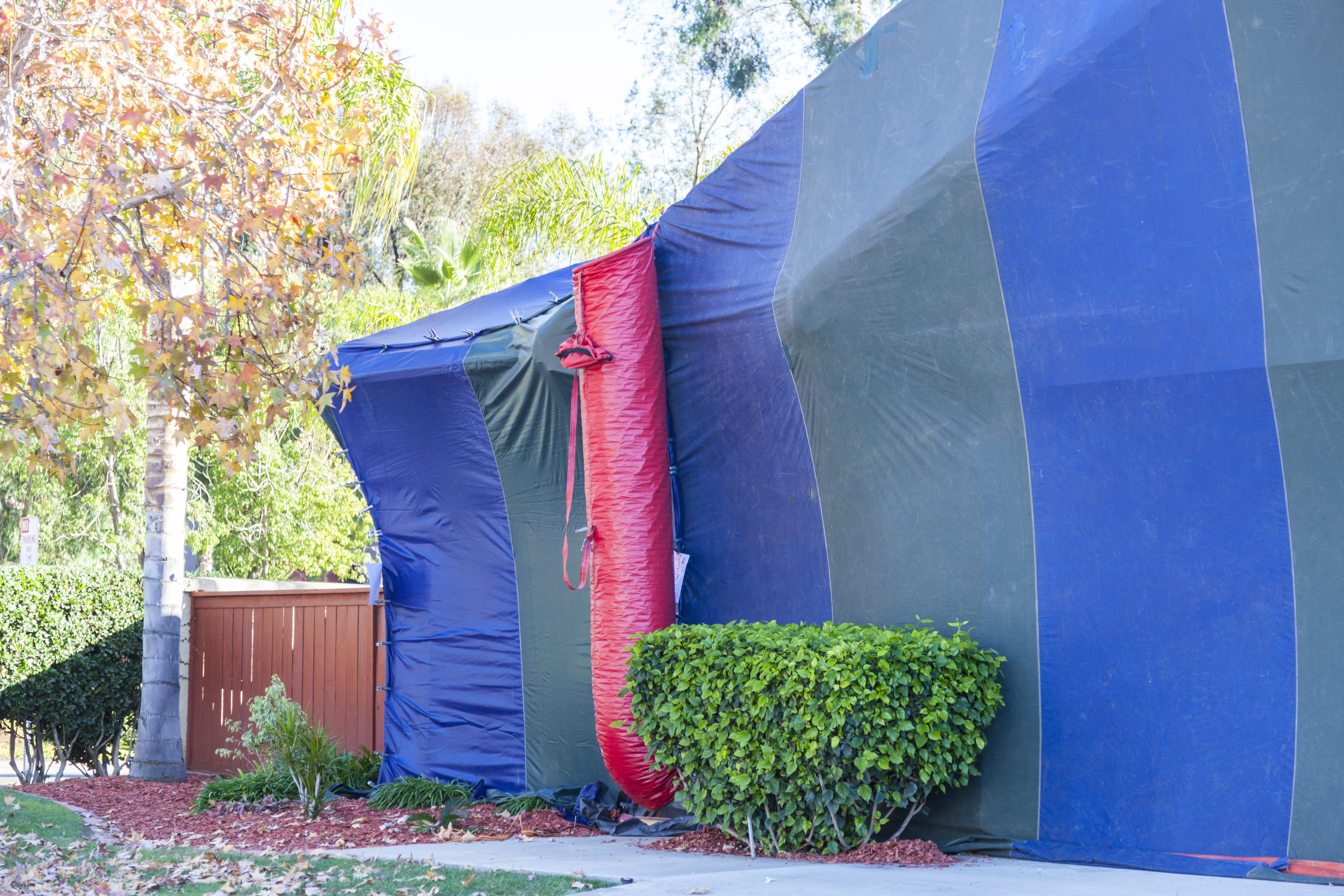What Are The Dangers Of Termite Tenting A House Hunker