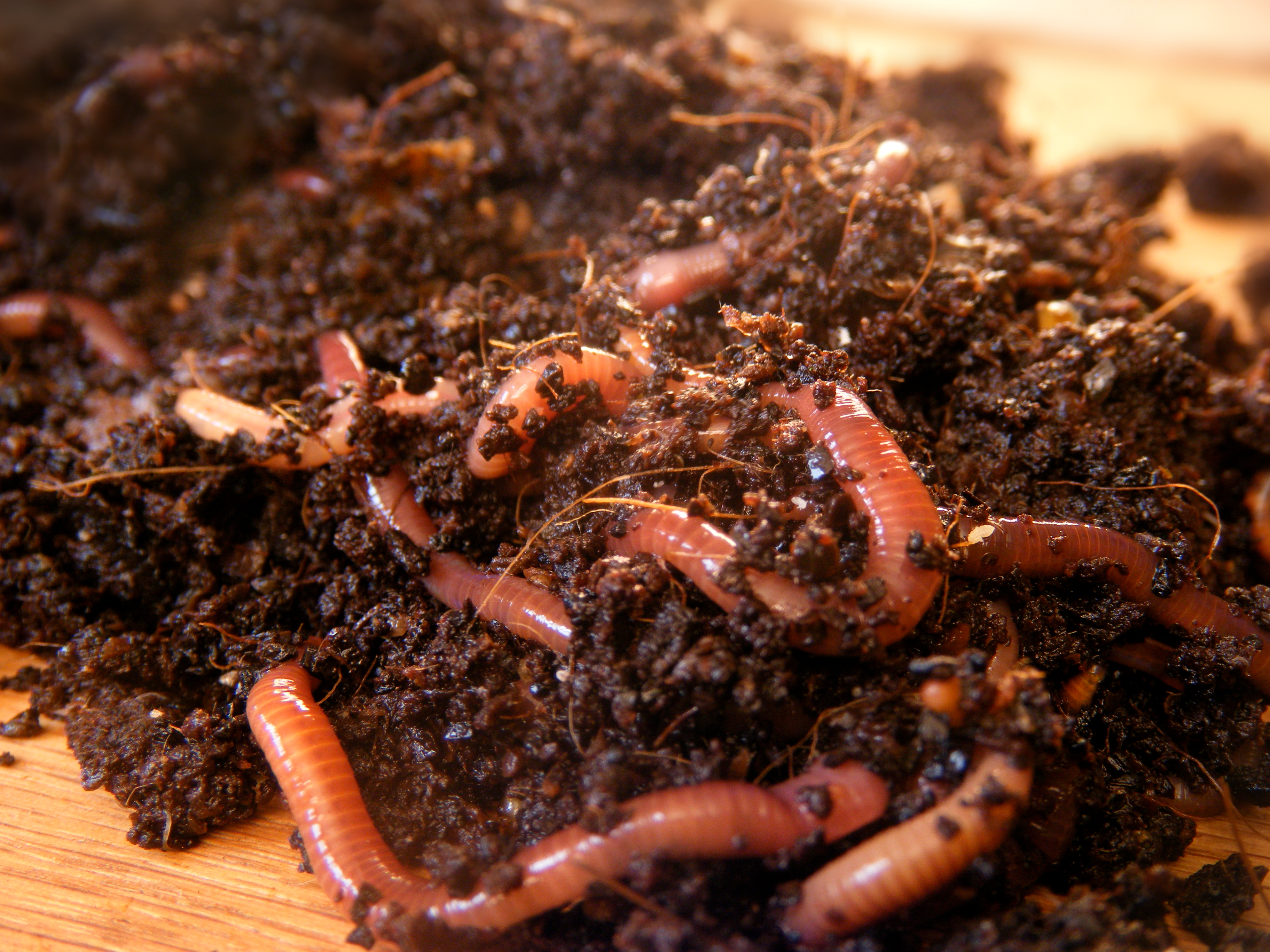 How to Raise Freshwater Prawns at Home | Career Trend