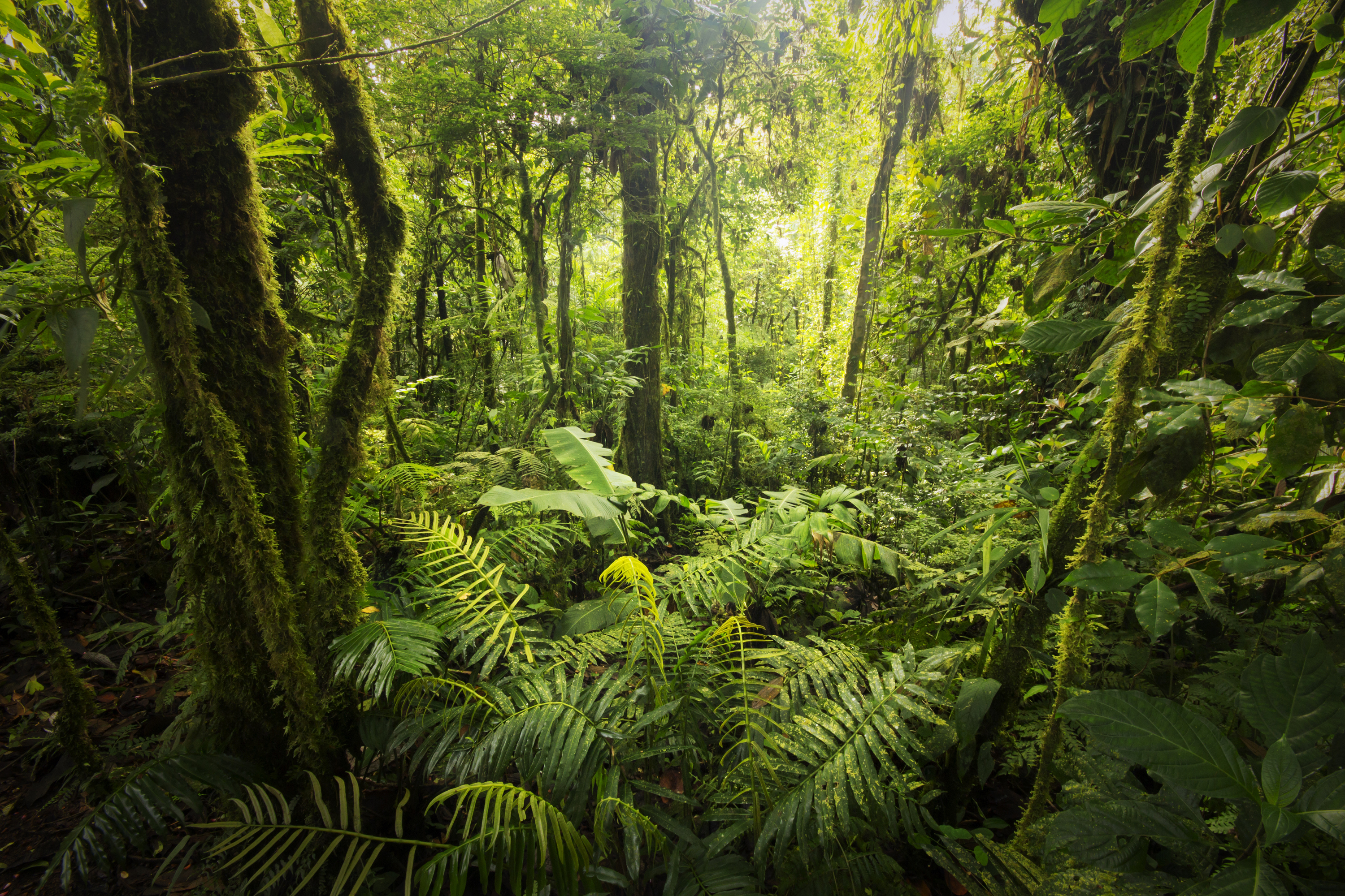 rainforest weather & climate | sciencing