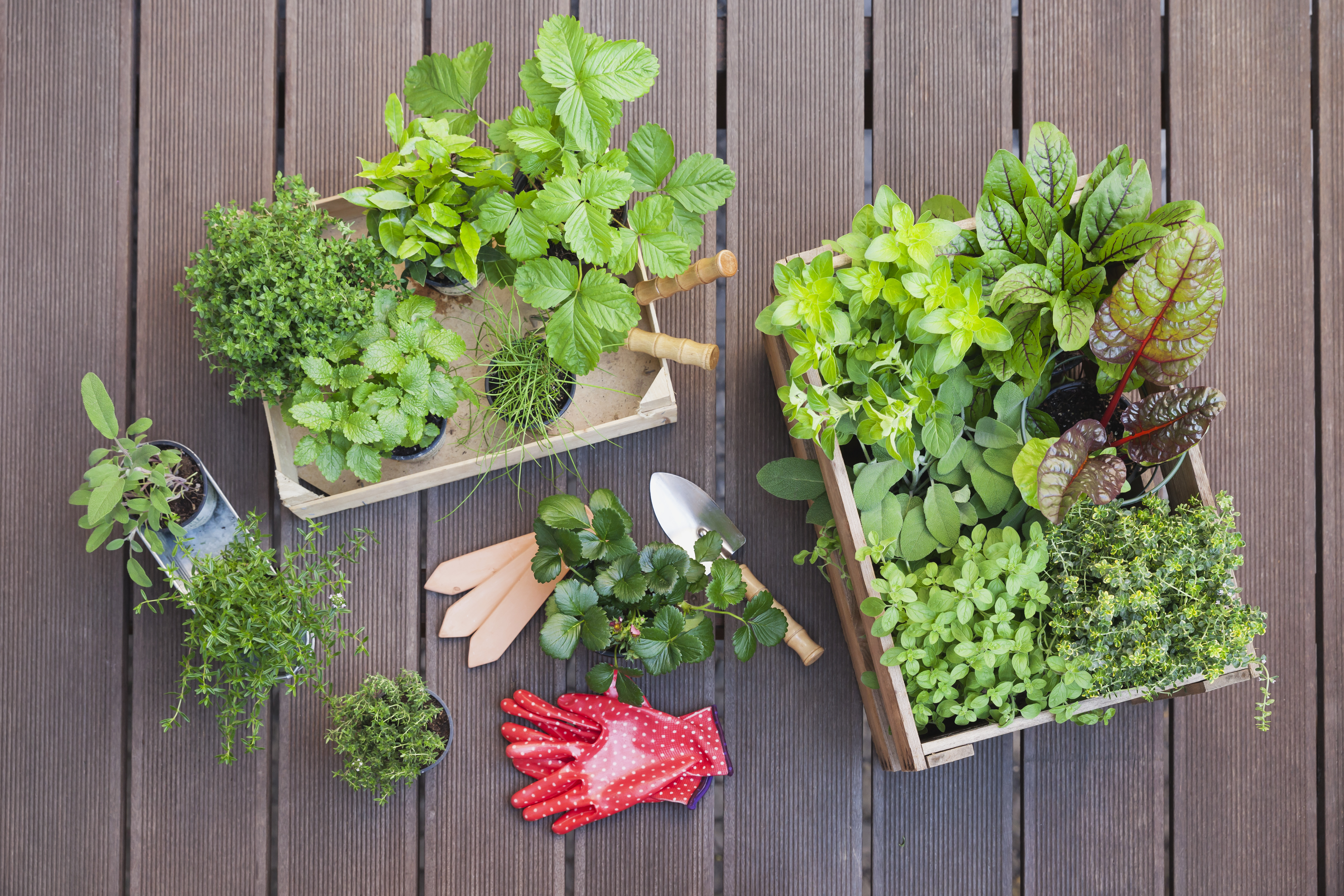 What Kind of Soil Do You Use in Containers for Vegetables