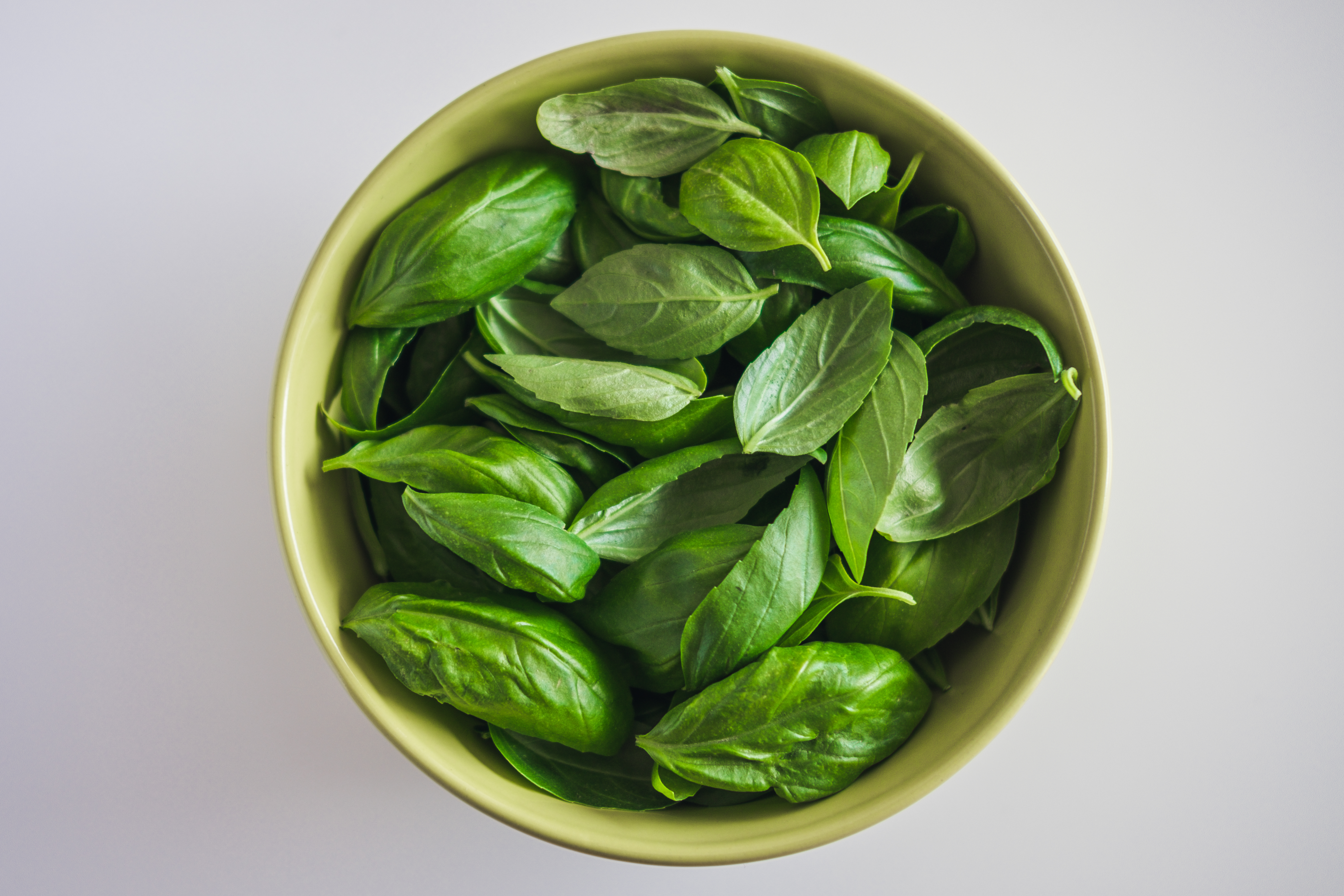 How to Repot Store-Bought Basil | Home Guides | SF Gate