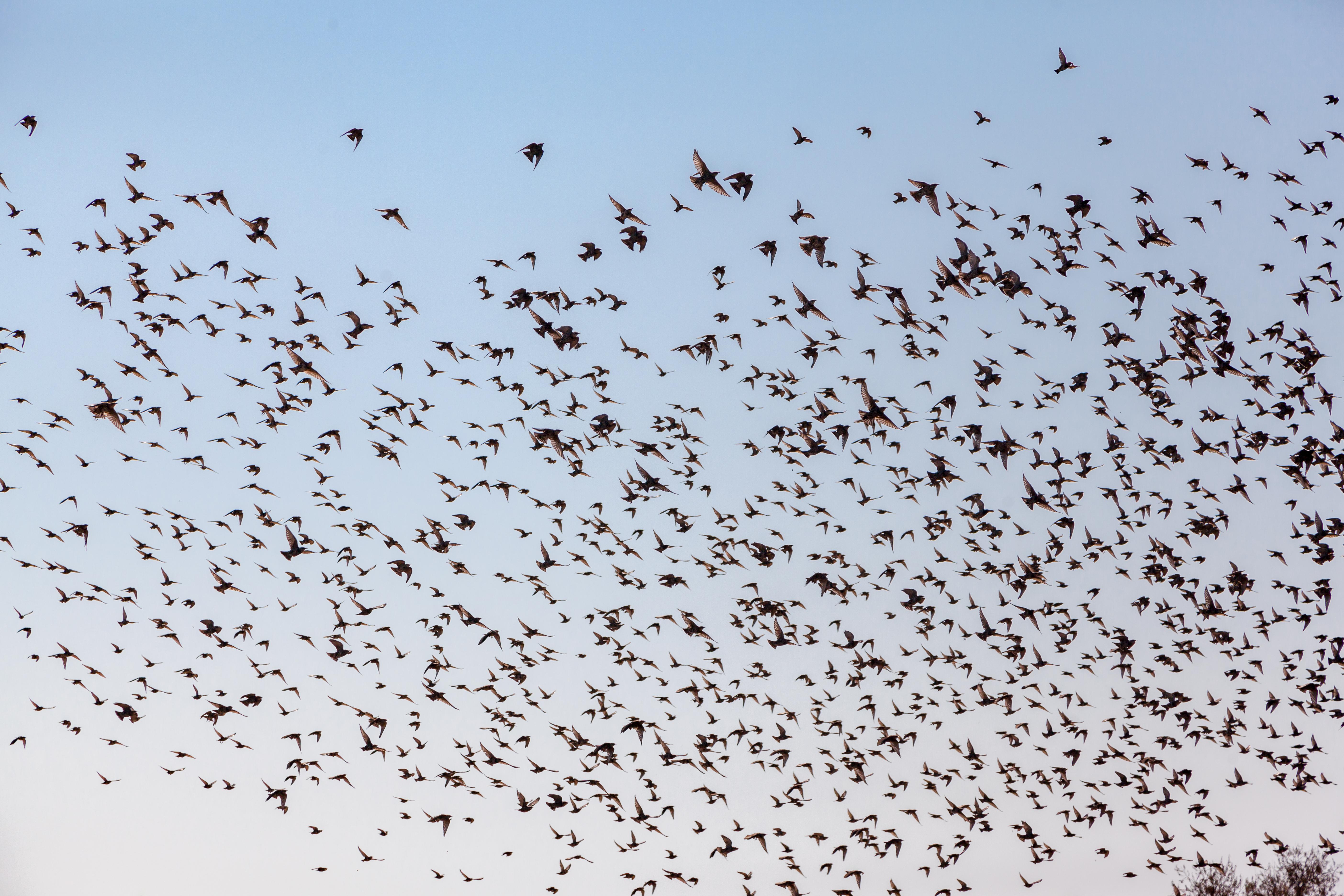 What Sounds Frighten Birds?