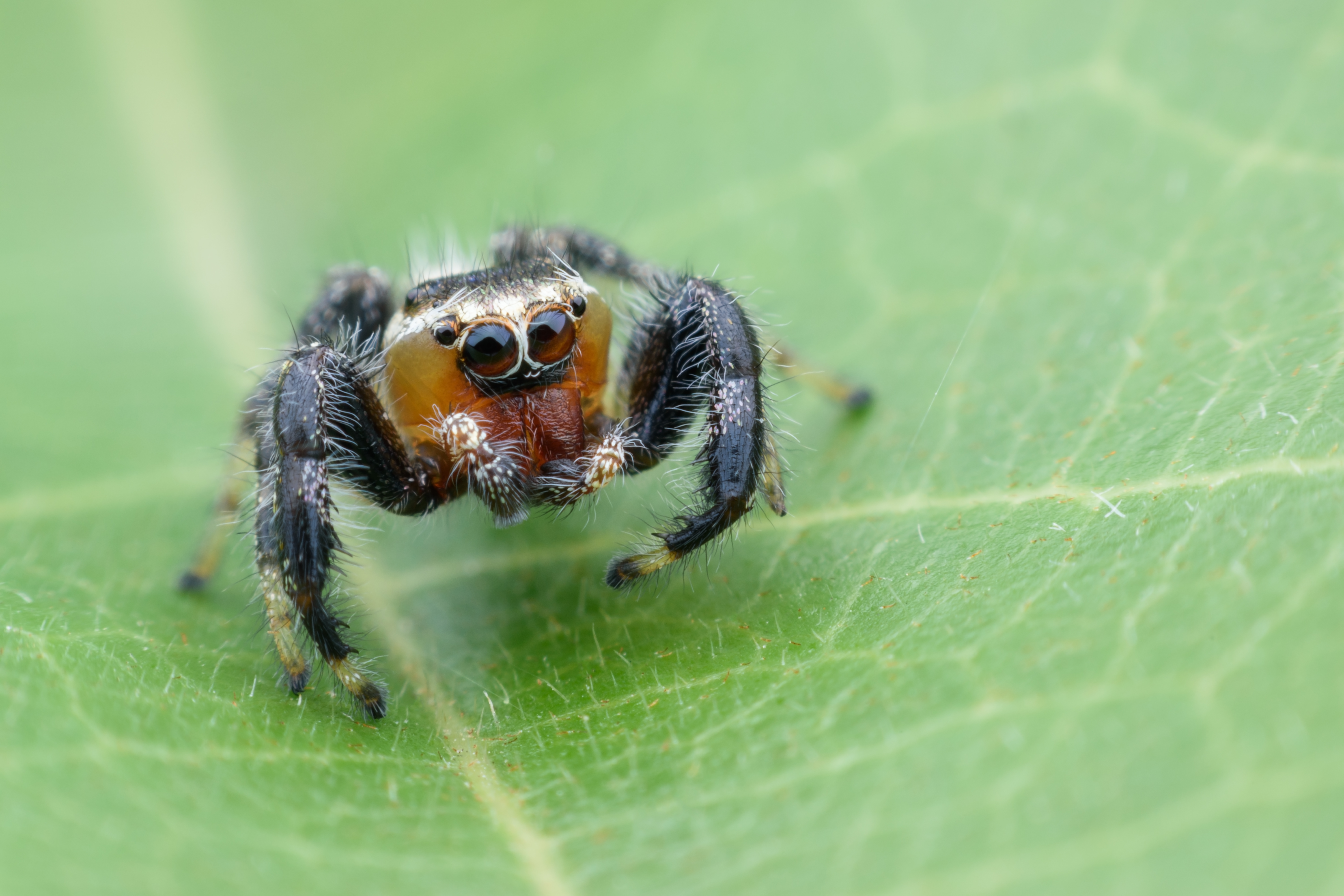 Types of Spiders: Black With White Dots | Sciencing
