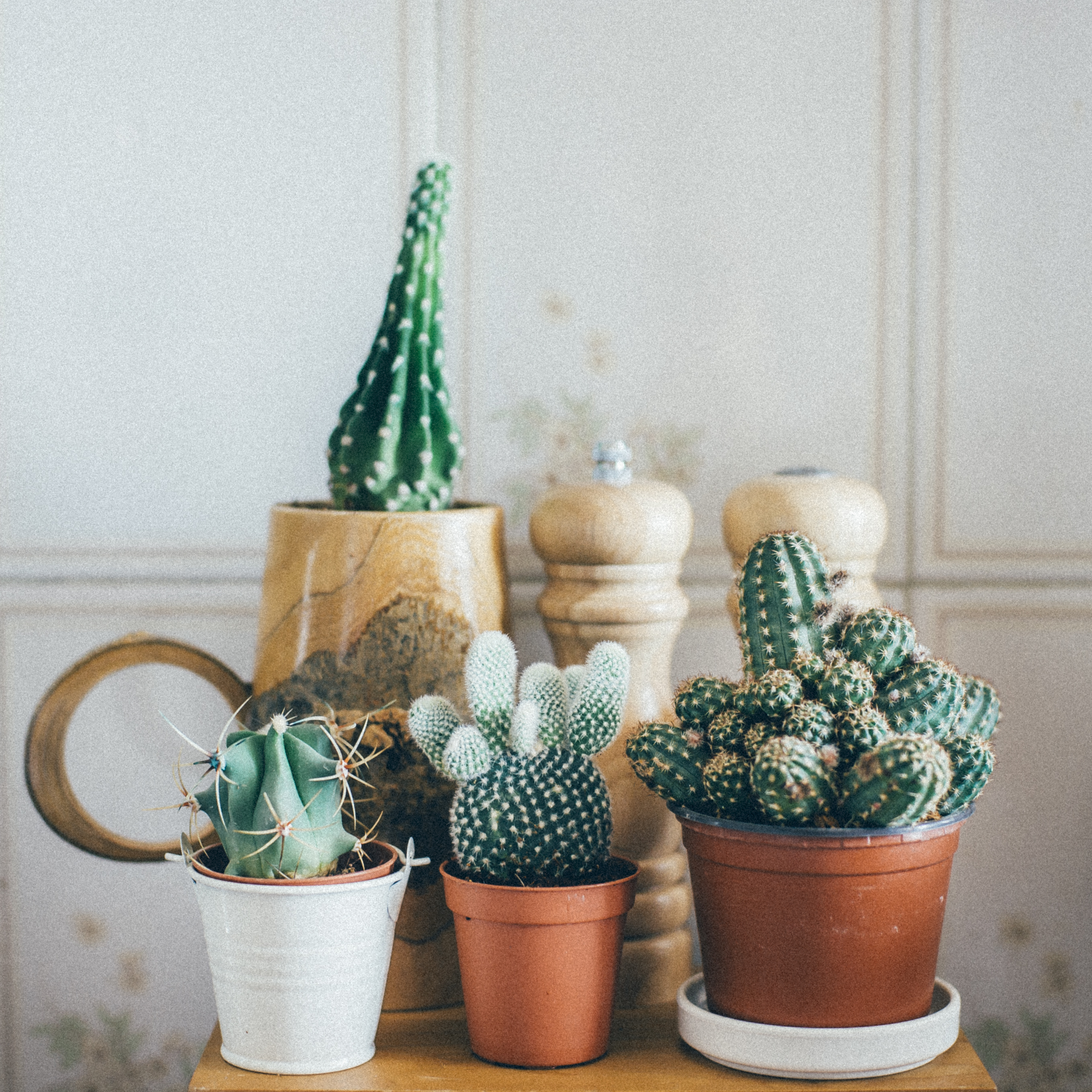 Cactus Facts & Information | Hunker
