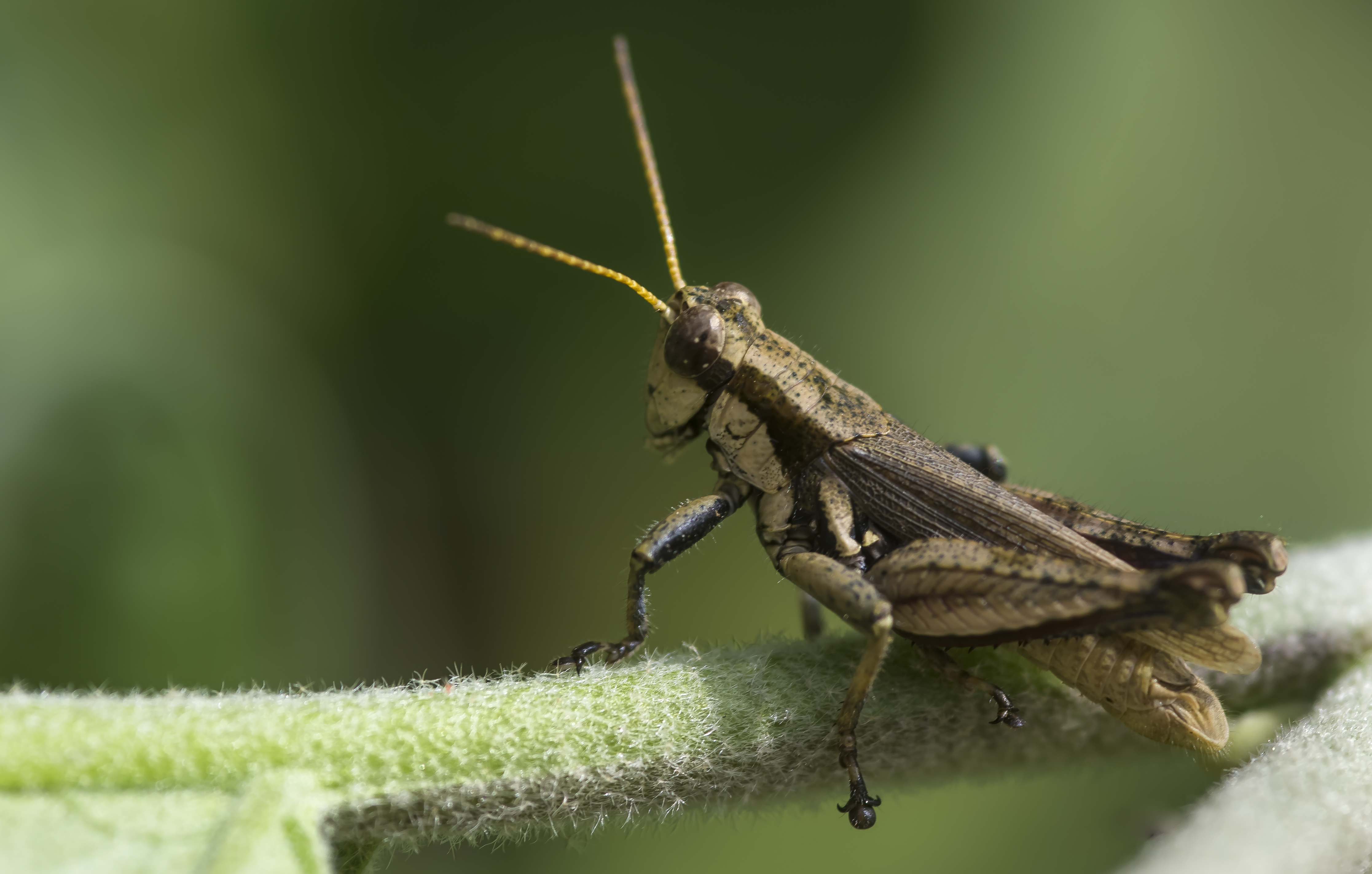 How to Stop Cricket Noises | Hunker